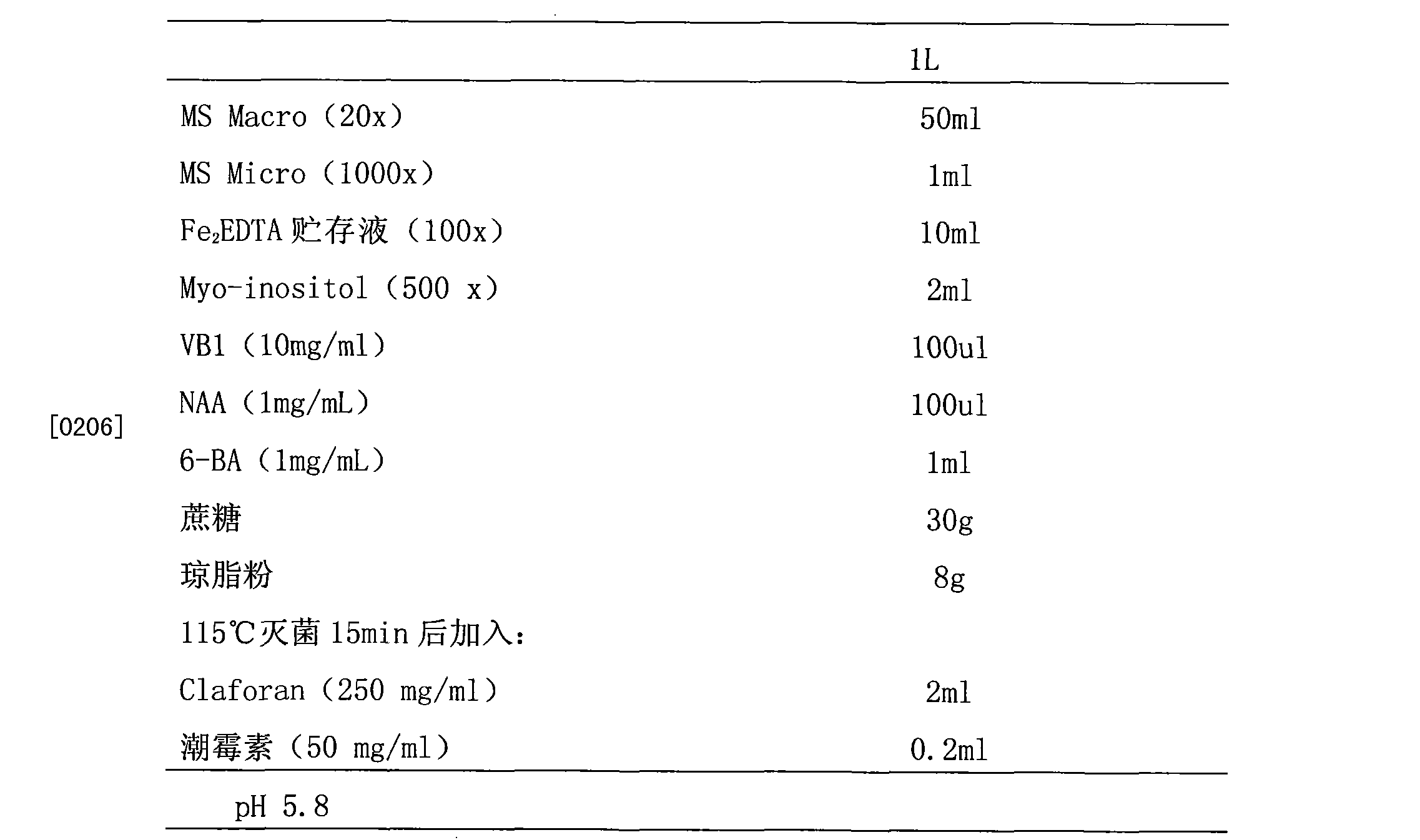 图3为经转化的水稻愈伤组织的gus染色结果