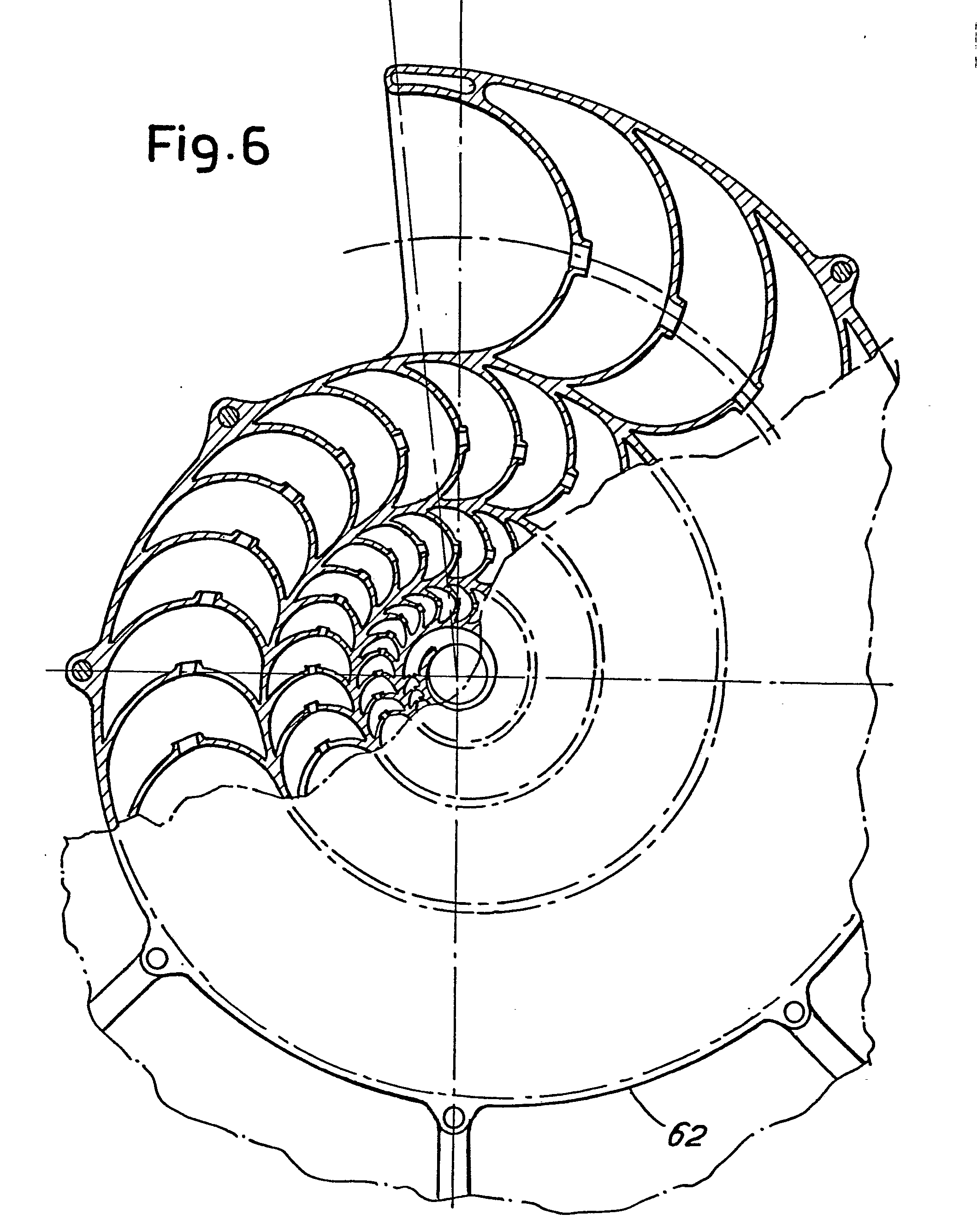 Chambered Nautilus Drawing For Nautilus Shell Drawing