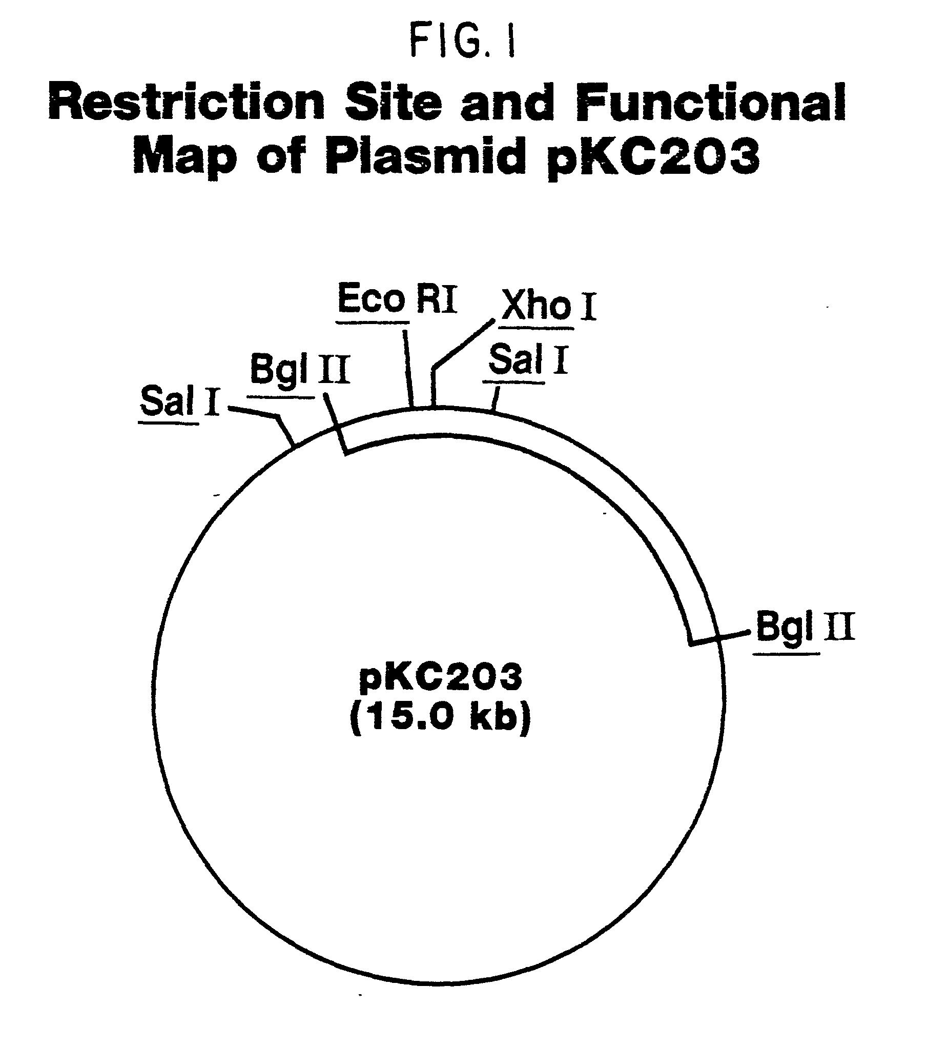 eukaryotic vectors