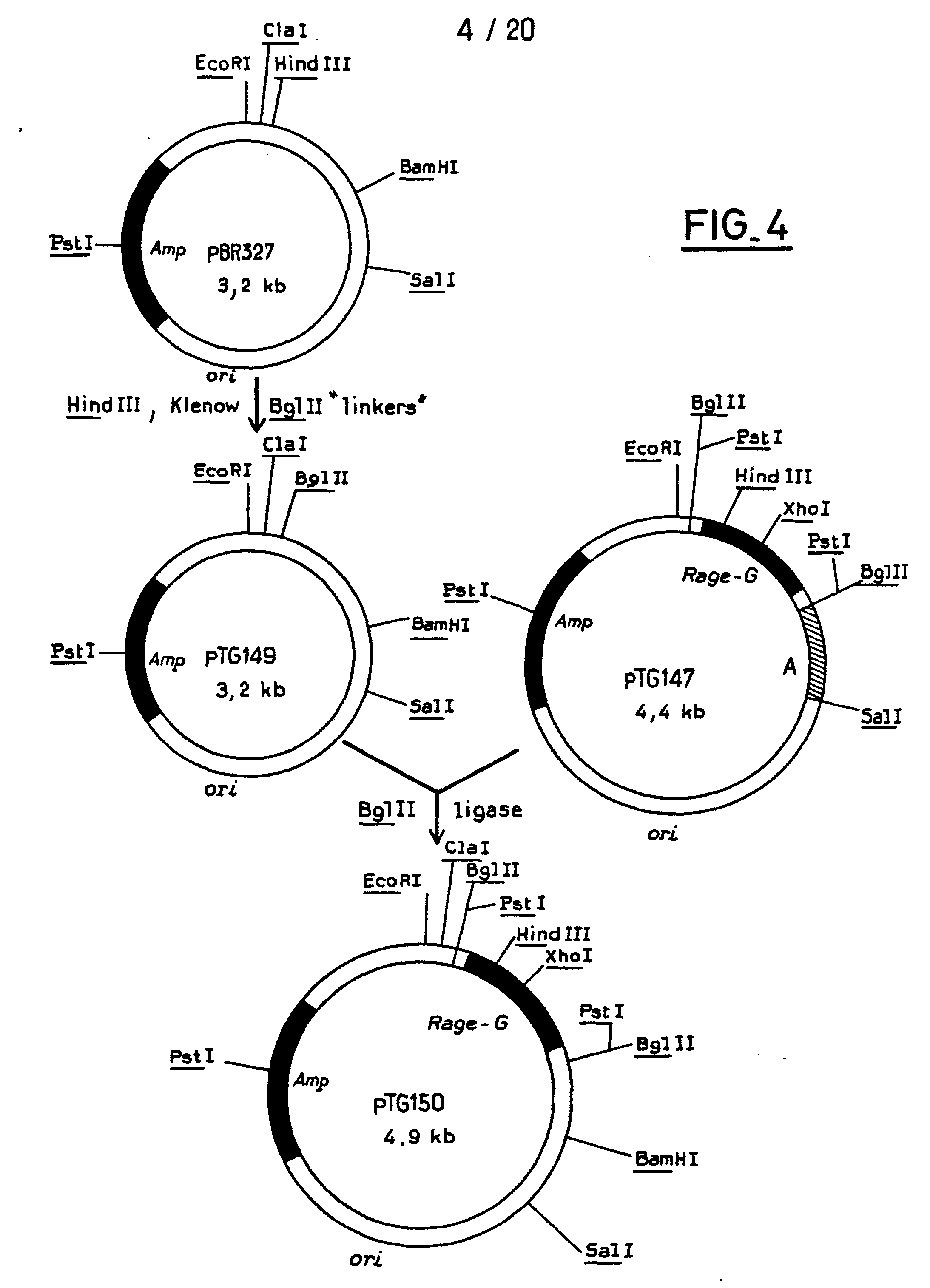 eukaryotic vectors for expression of proteins Wide-range integrative expression vectors for fungi,  novel microbial and eukaryotic expression systems  production of recombinant proteins.