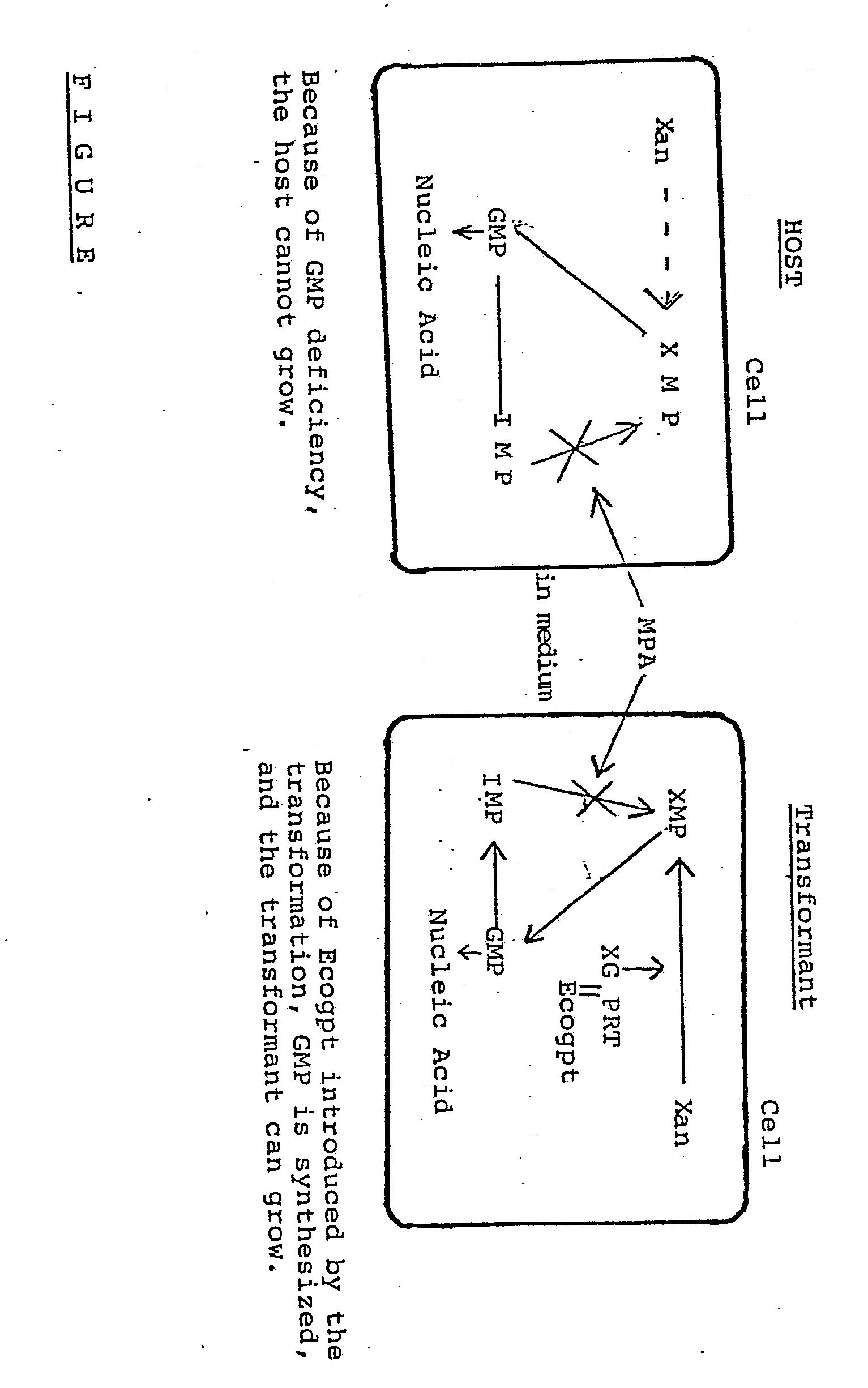 电路 电路图 电子 户型 户型图 平面图 原理图 1533_2451 竖版 竖屏