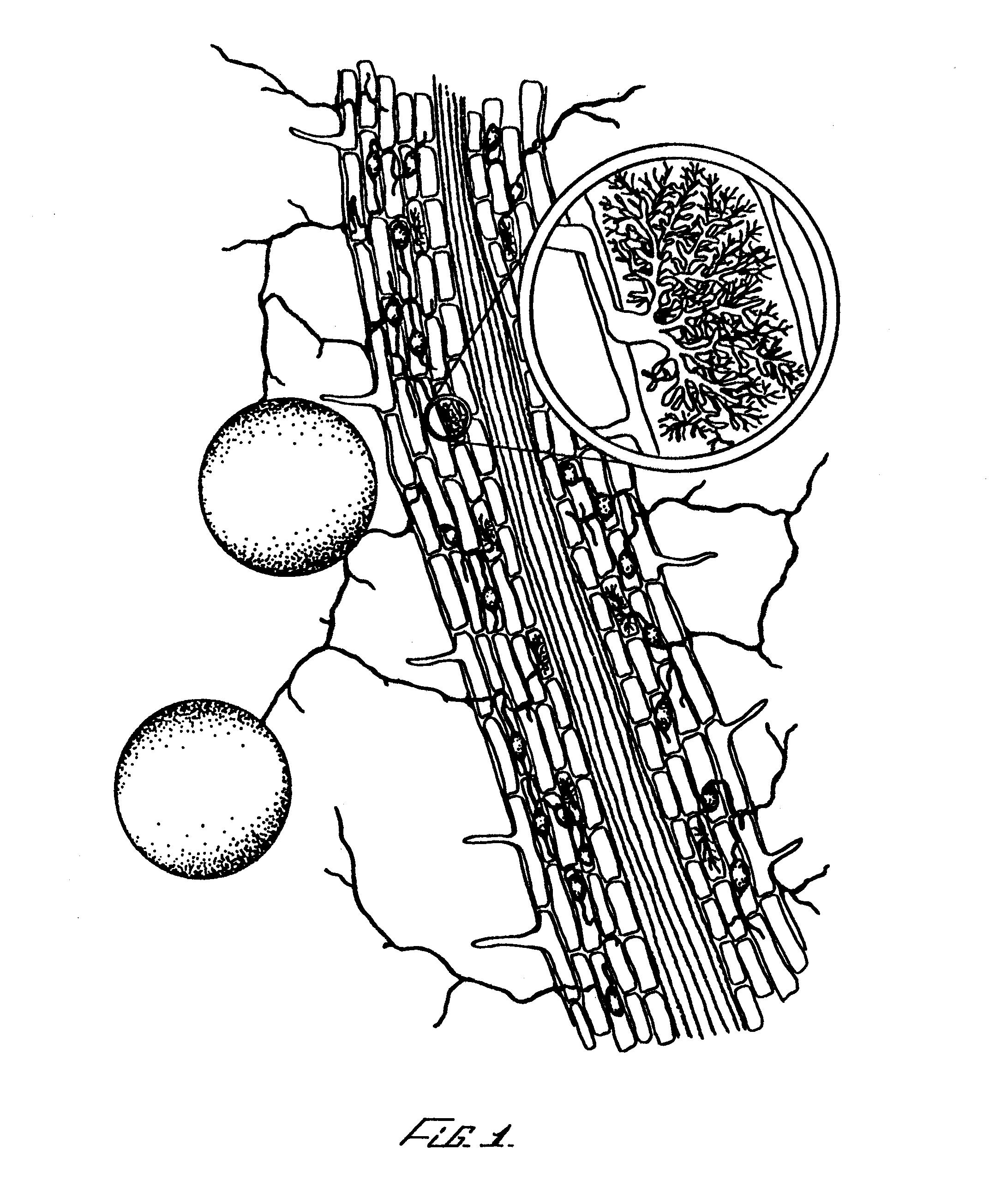Patent EP020962... Endomycorrhizal