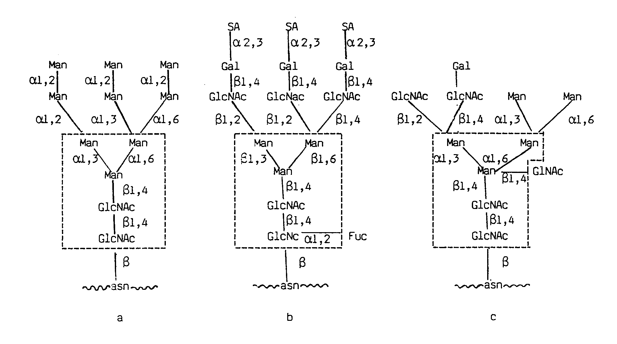 N Glycosidic Bond Figure imgb0003