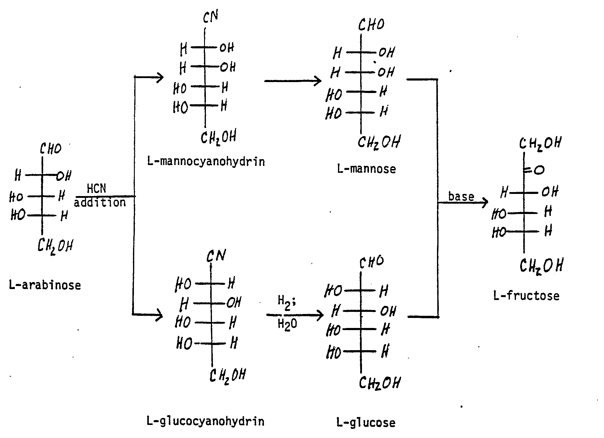 Figure imgb0001  L Arabinose