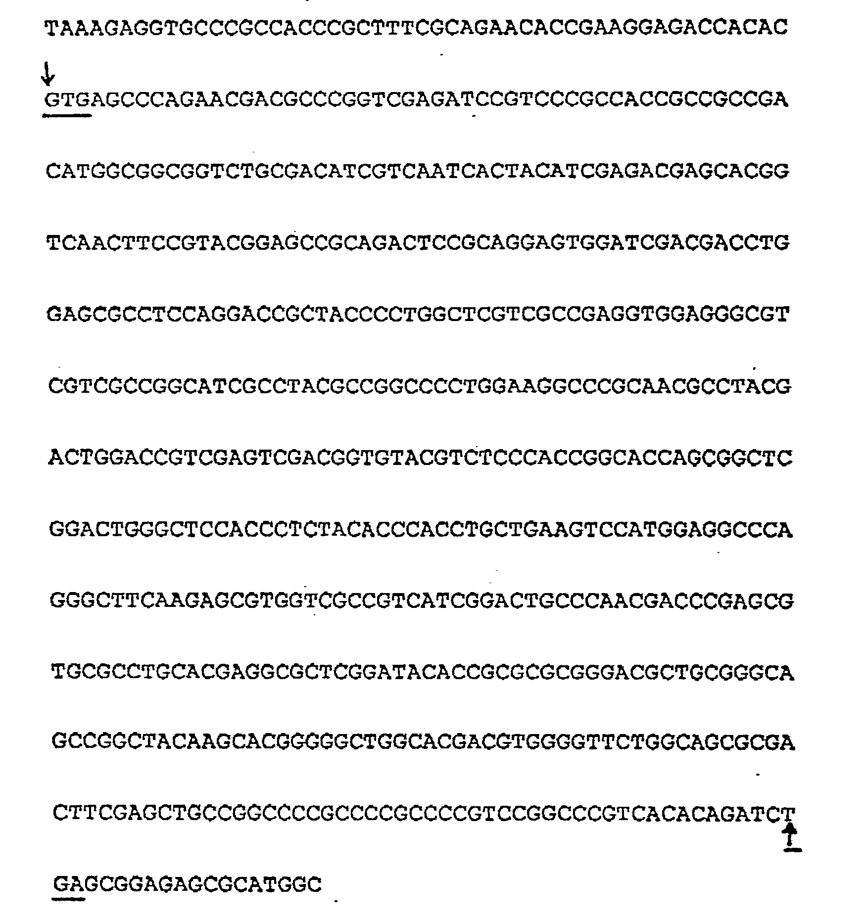 Patent EP0242246A1 Plant cells resistant to glutamine synthetase inhibitors, made by genetic