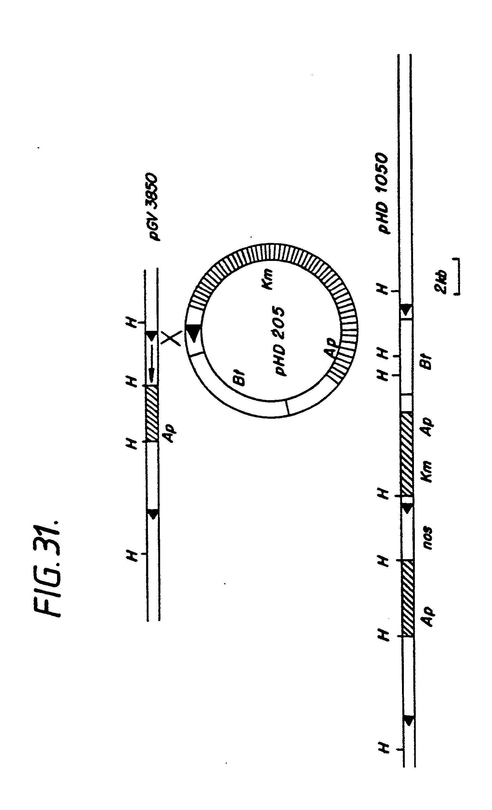 patent ep0451878a1