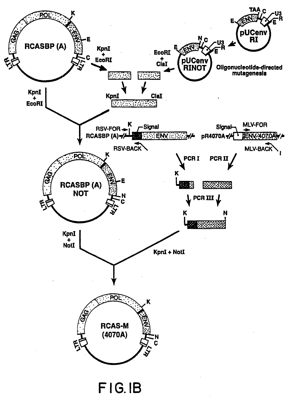 patent ep0827547b1