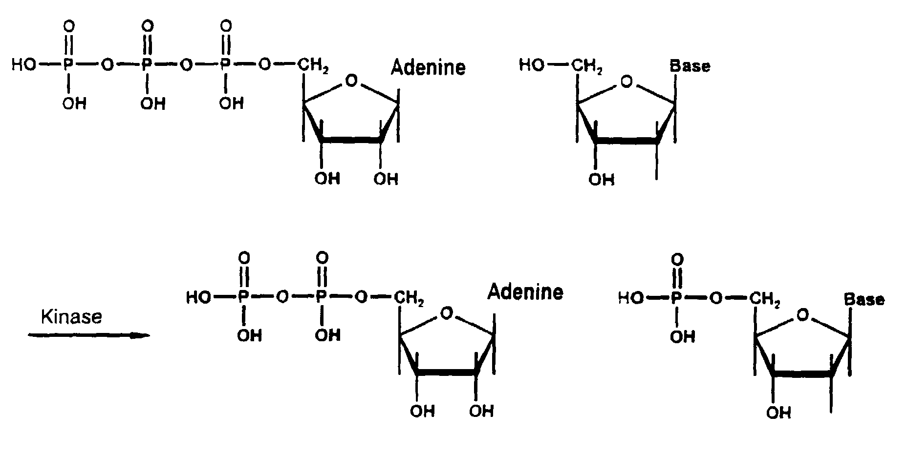 deoxynucleoside -#main