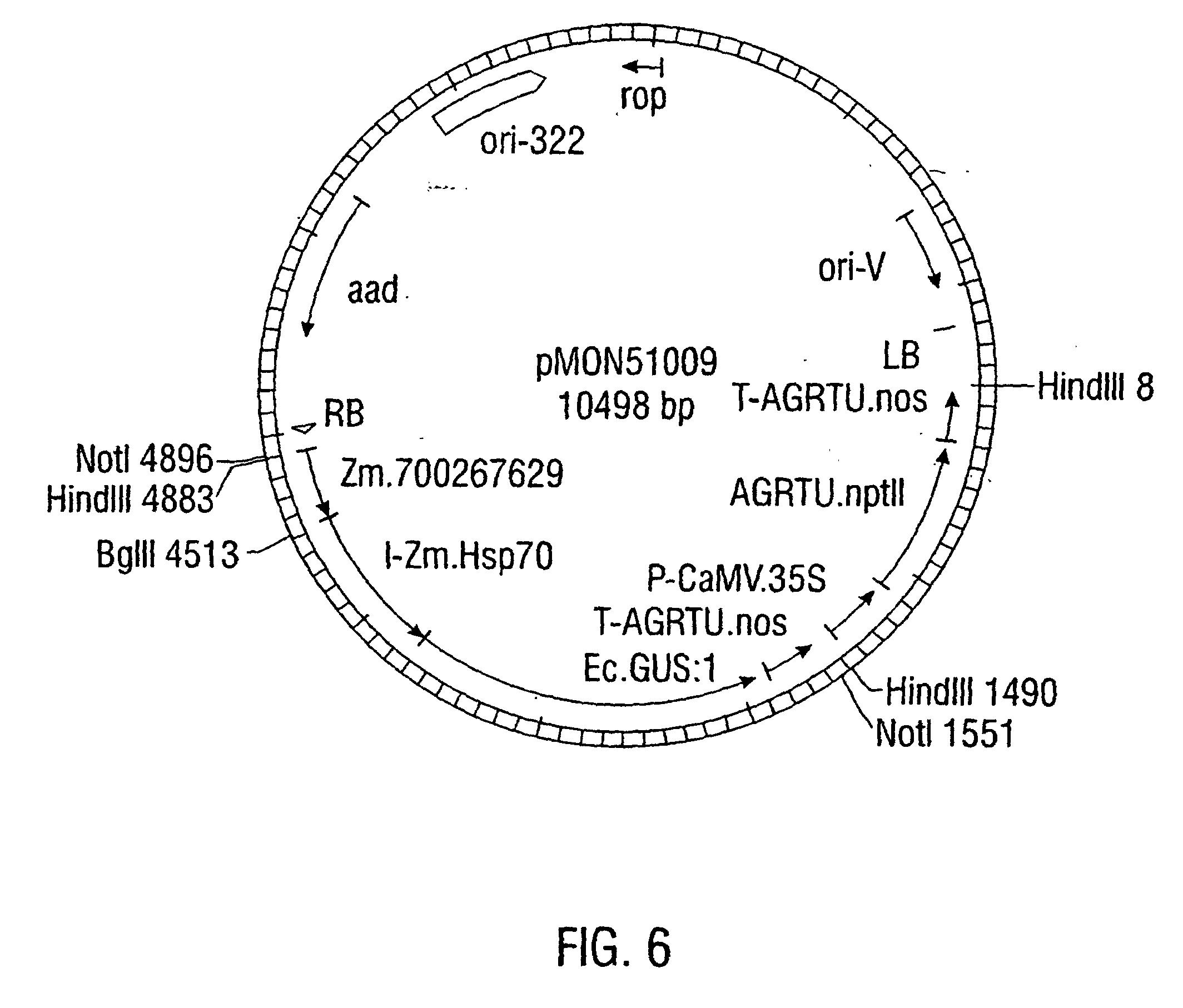 patent ep1214402b1