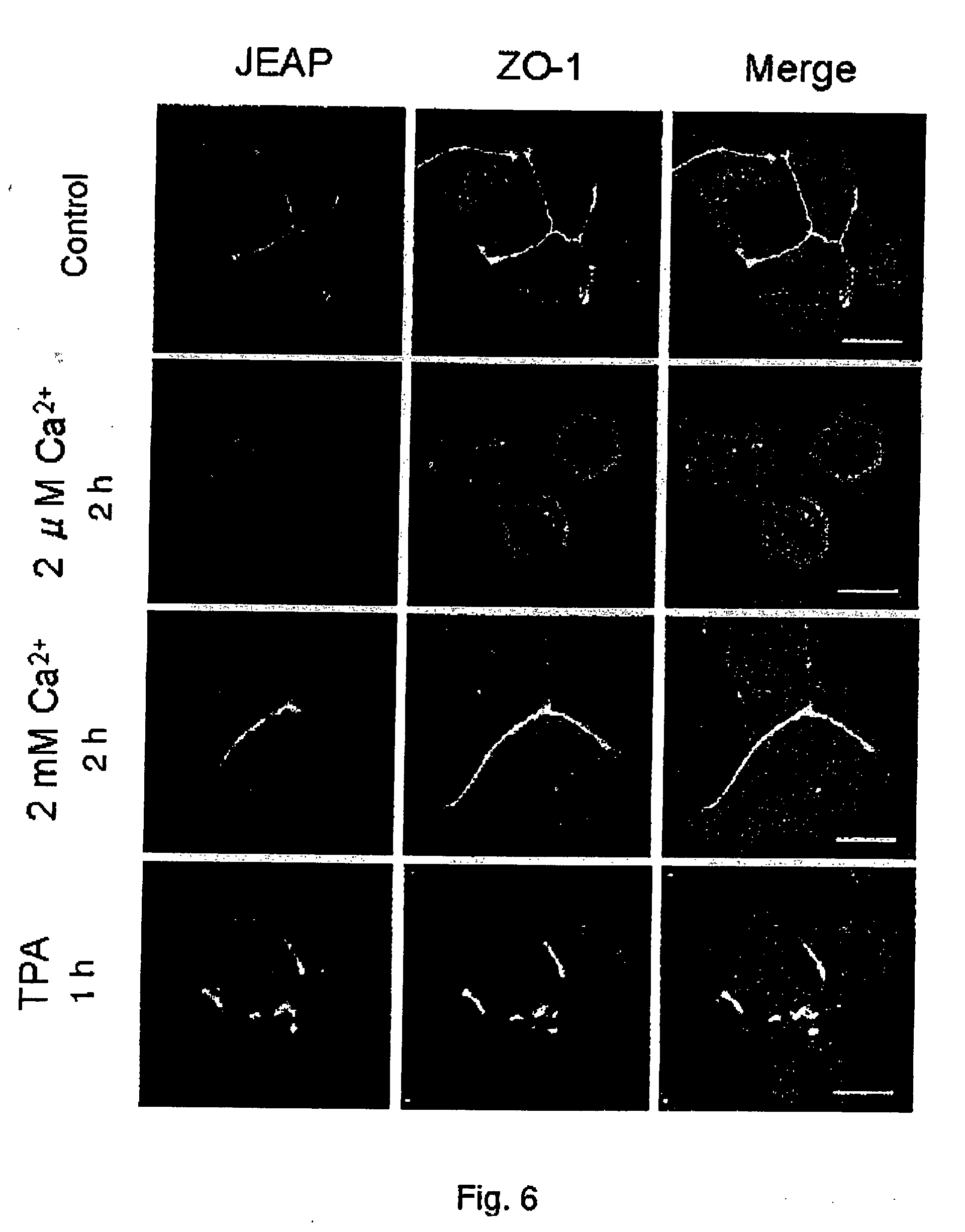 maniatis molecular cloning a laboratory manual pdf