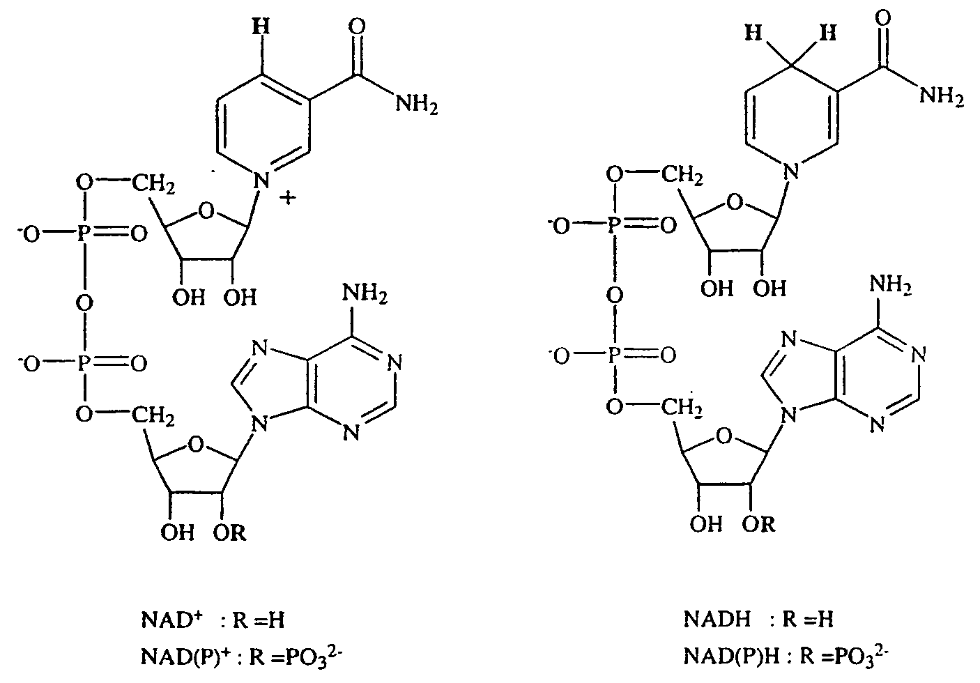 nadh  nadph oxidoreductases  oxidoreductases  nadh  nadph