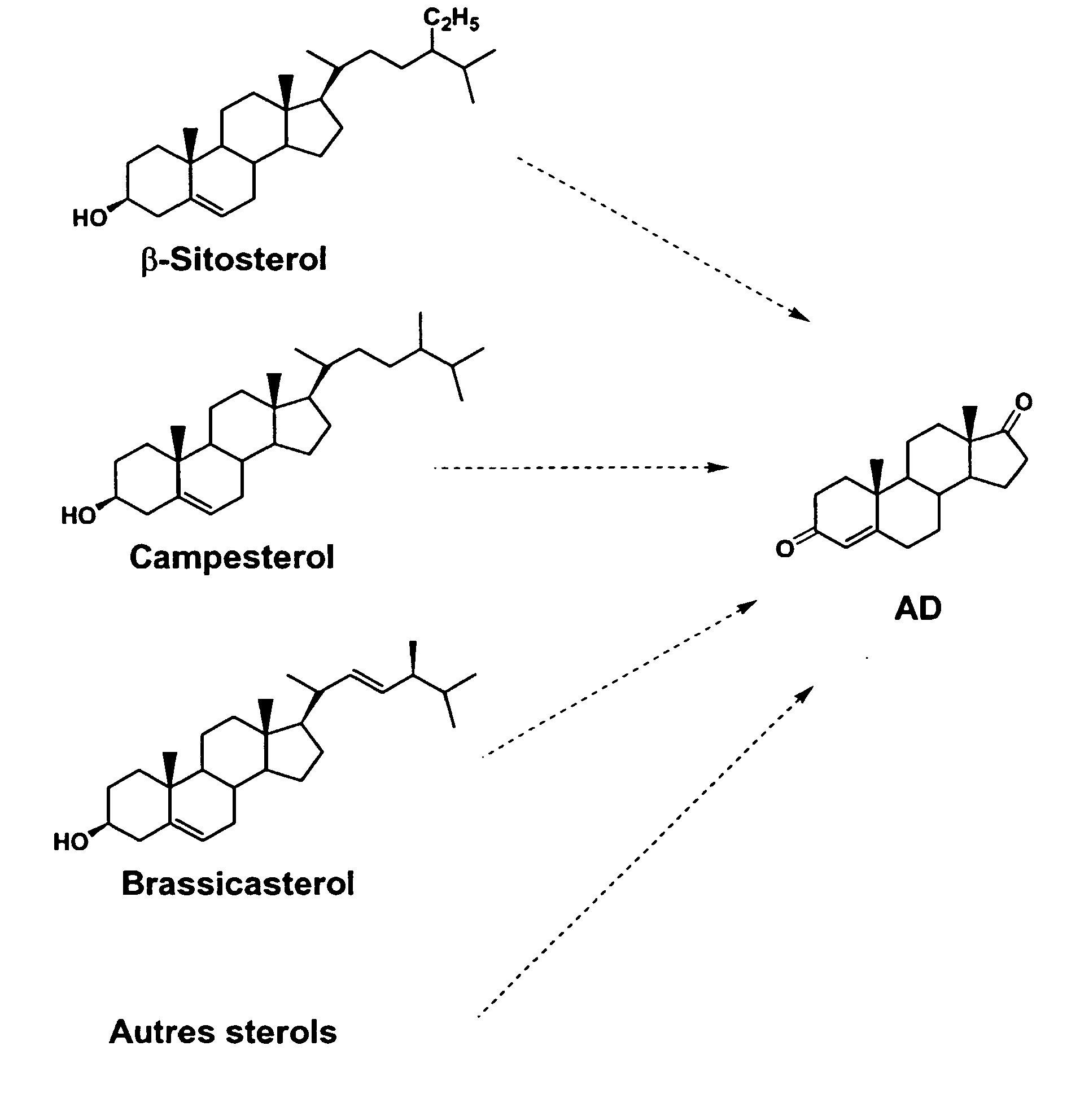 bioconversion of steroids