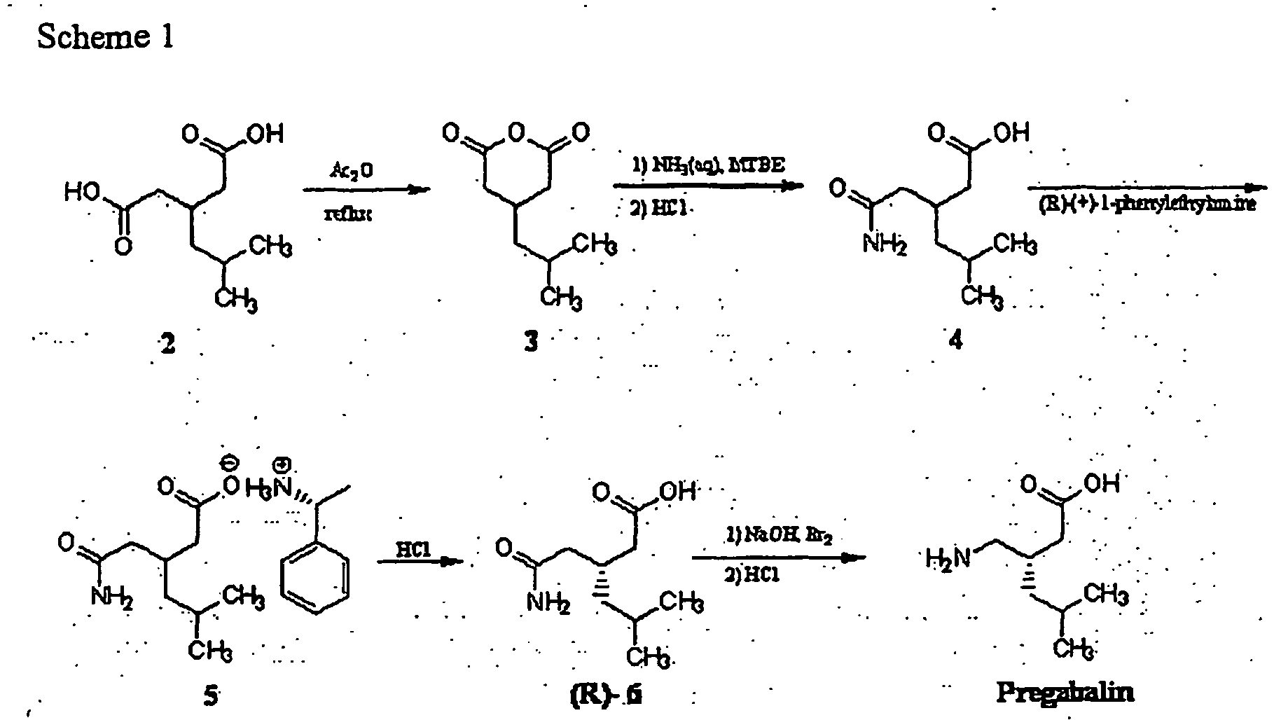 pregabalin enzymatic synthesis and degradation