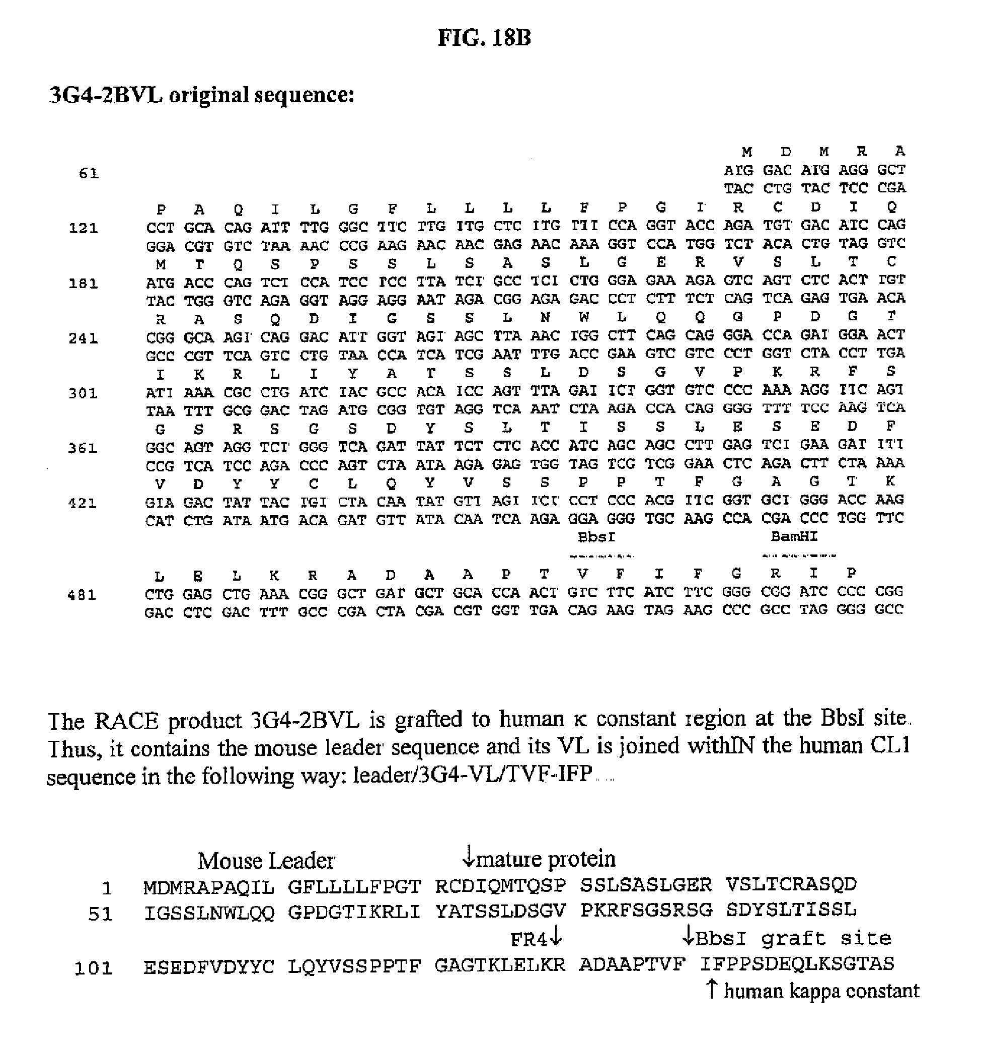 complimentary strand to cgt ctc ttc gga cac Answers for constructing a protein lab dna agc tac tta ctc acc ata mrna ucg mrna cug cac ugg uau ccg gga uuu ugc.