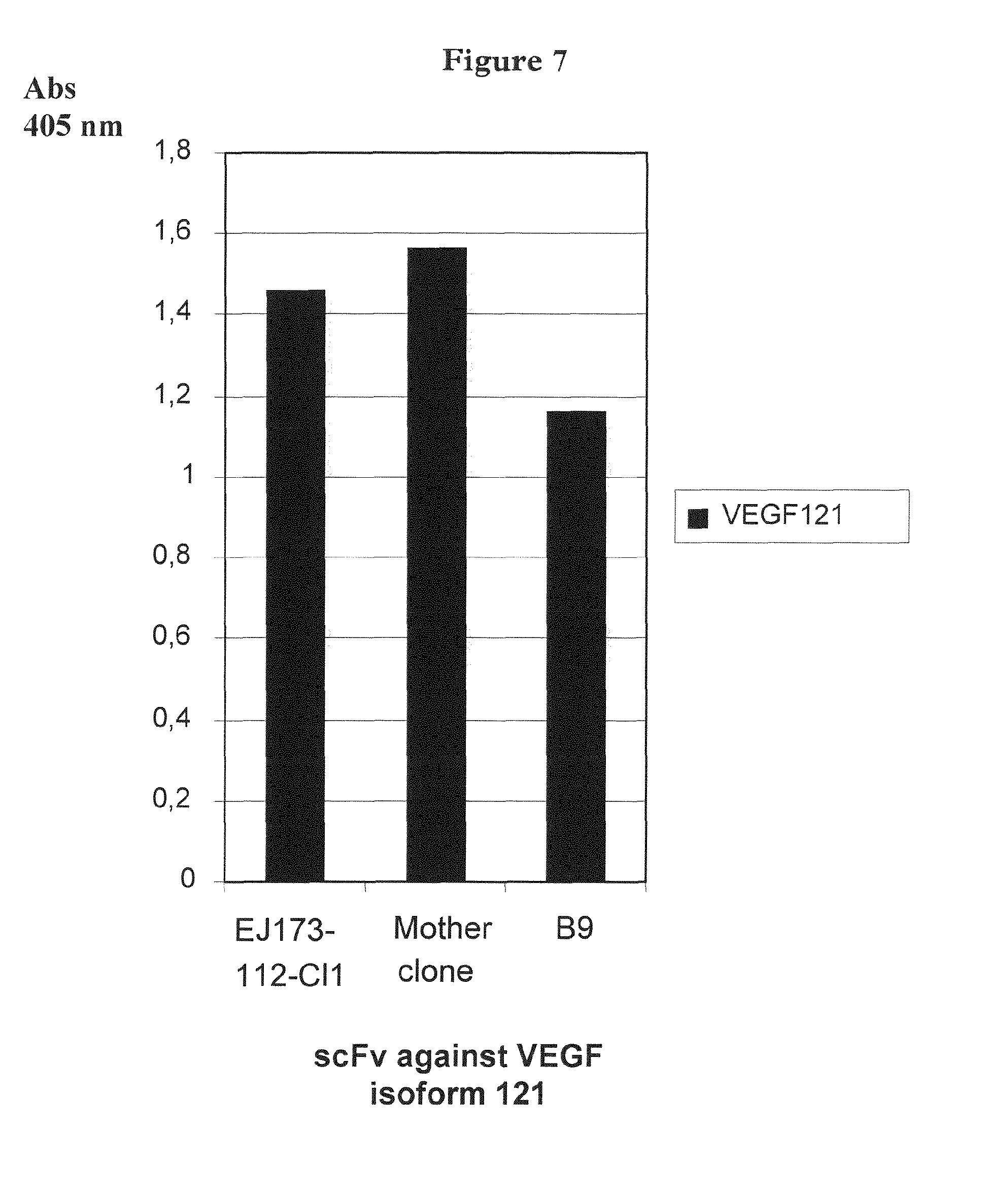 Anticorps anti-VEGF