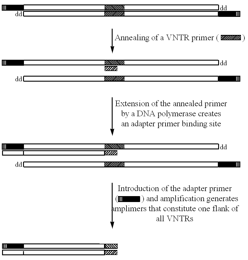 Patent US20020058250 - Extraction and utilisation of vntr alleles ...