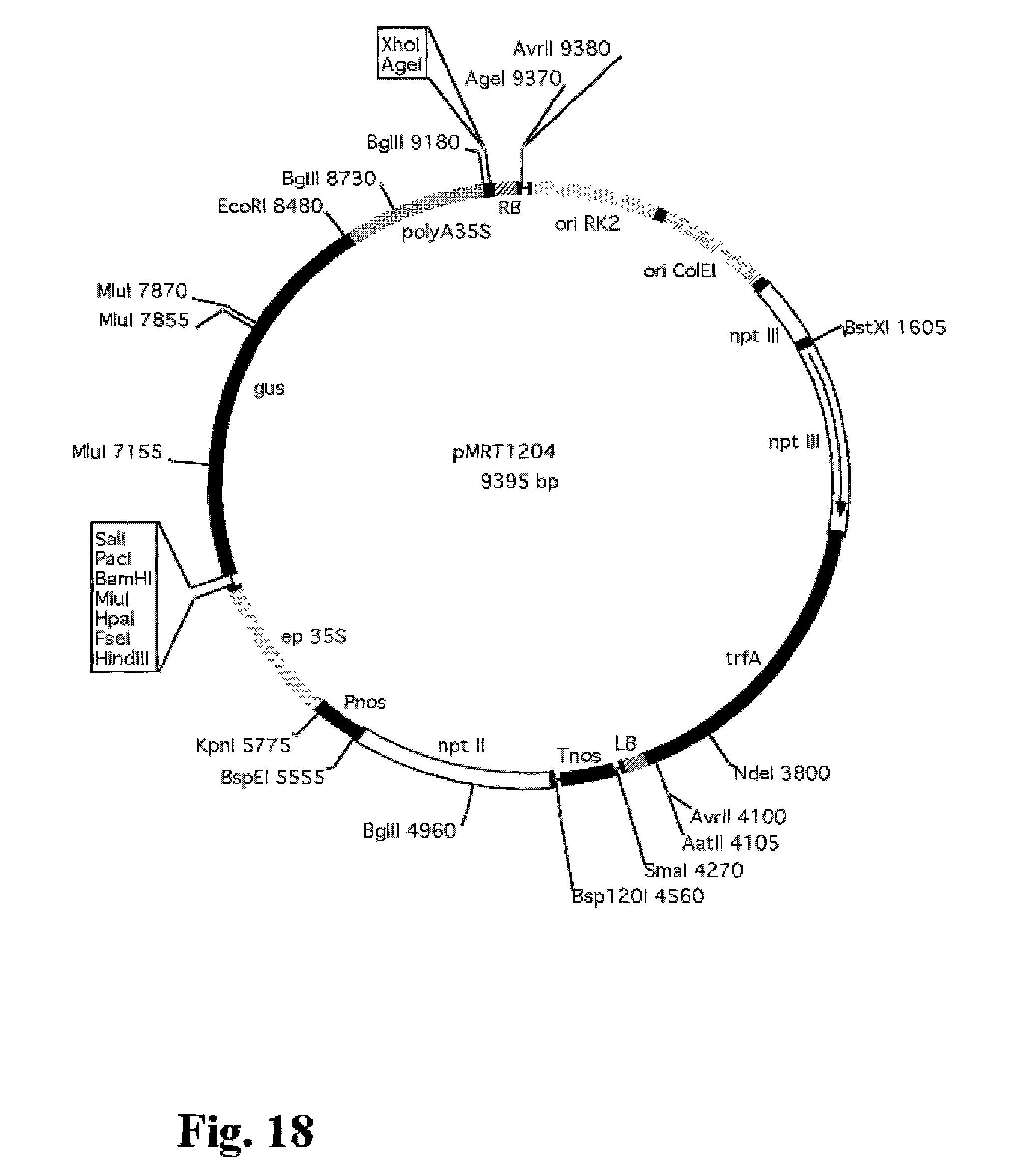 patent us20030175976