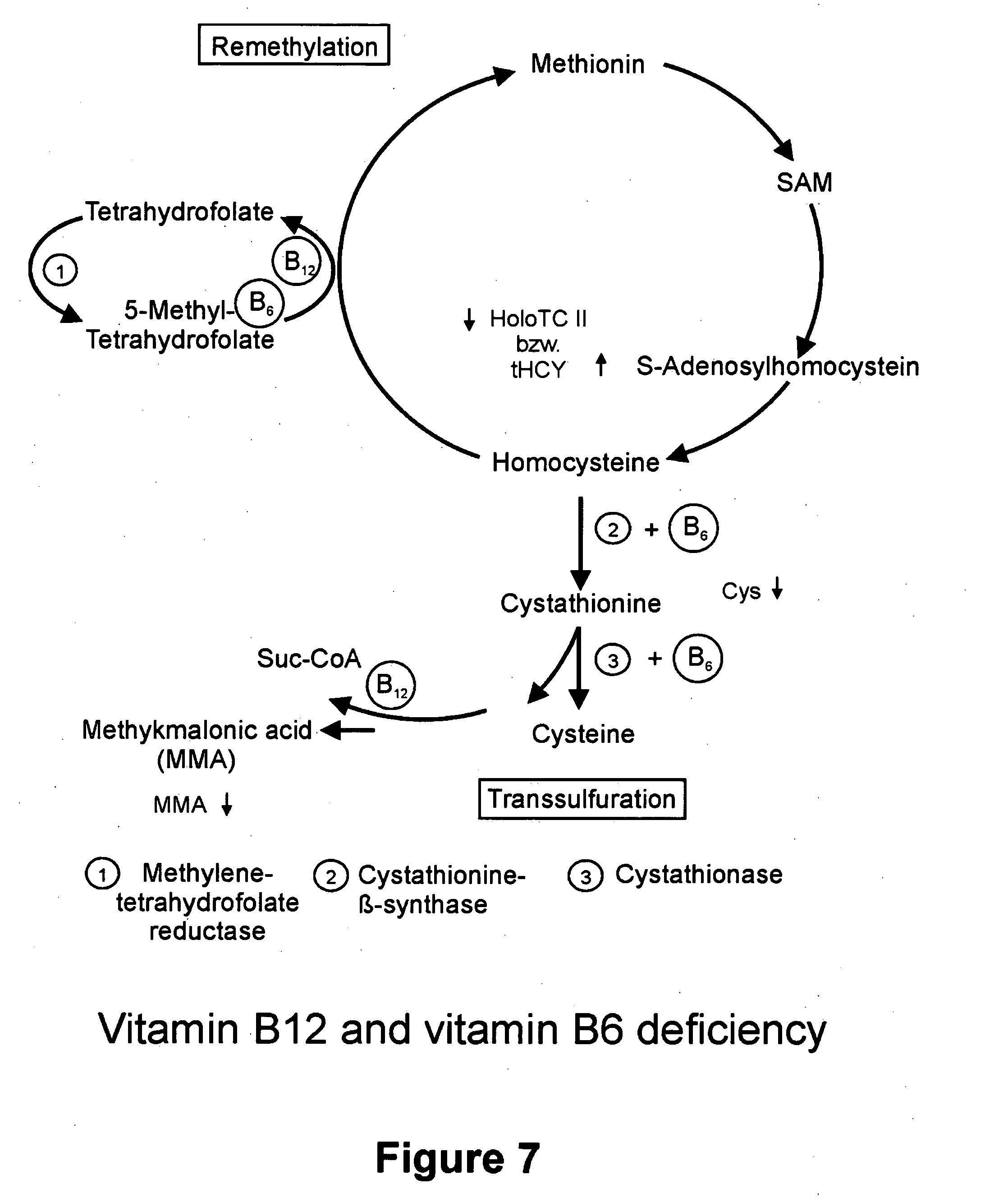 patent us20060105392 - differential diagnosis of vitamin b12, Skeleton