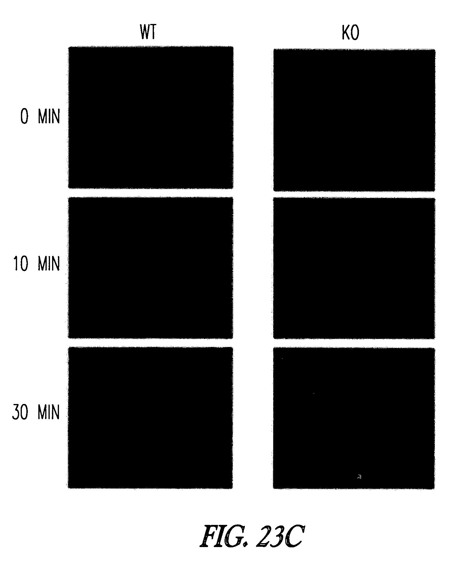 5-methyltetrahydrosarcinapterin:corrinoid/iron-sulfur protein Co-methyltransferase