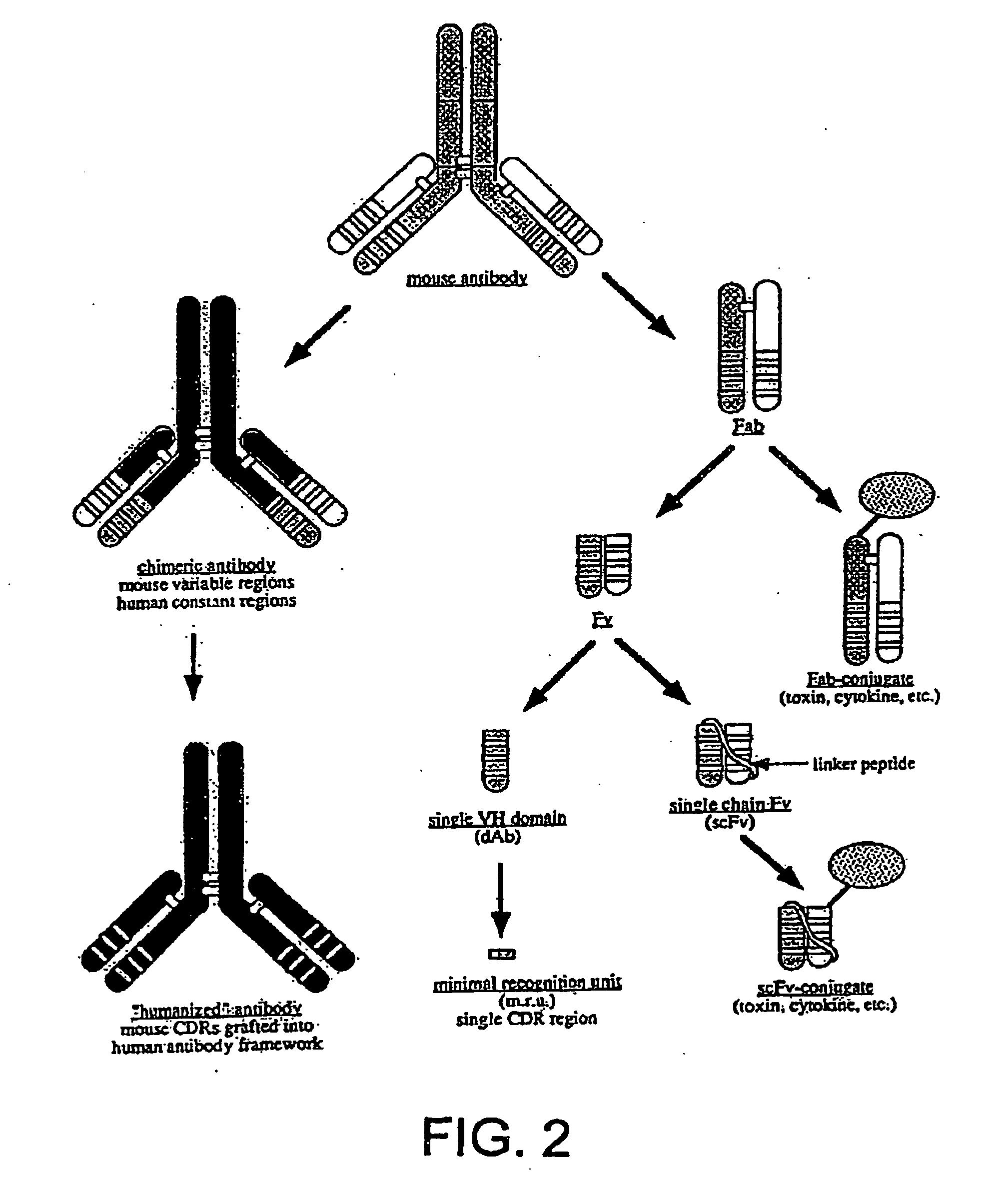 H Antigen Patent US20060246058 -...