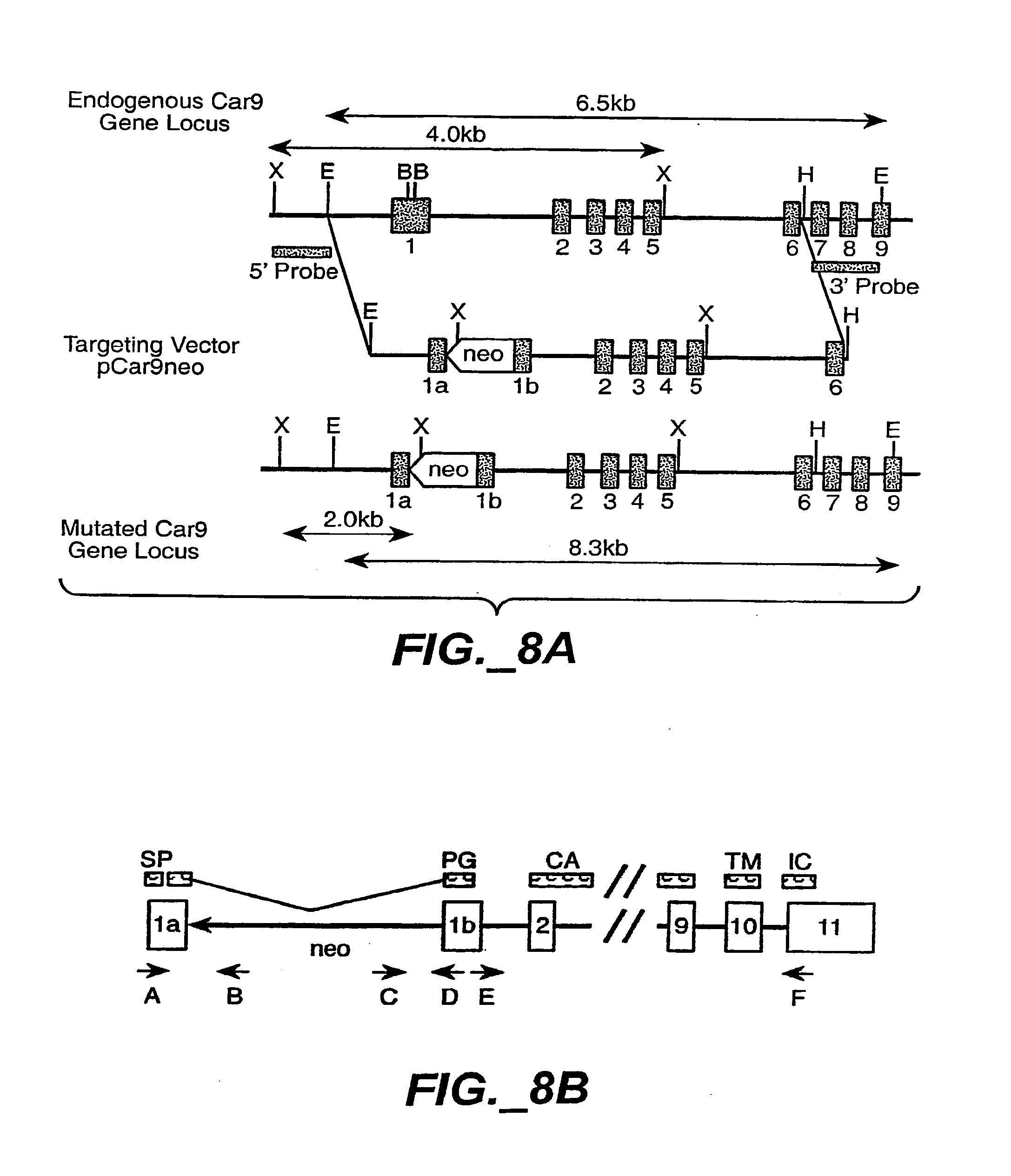 电路 电路图 电子 原理图 2174_2529