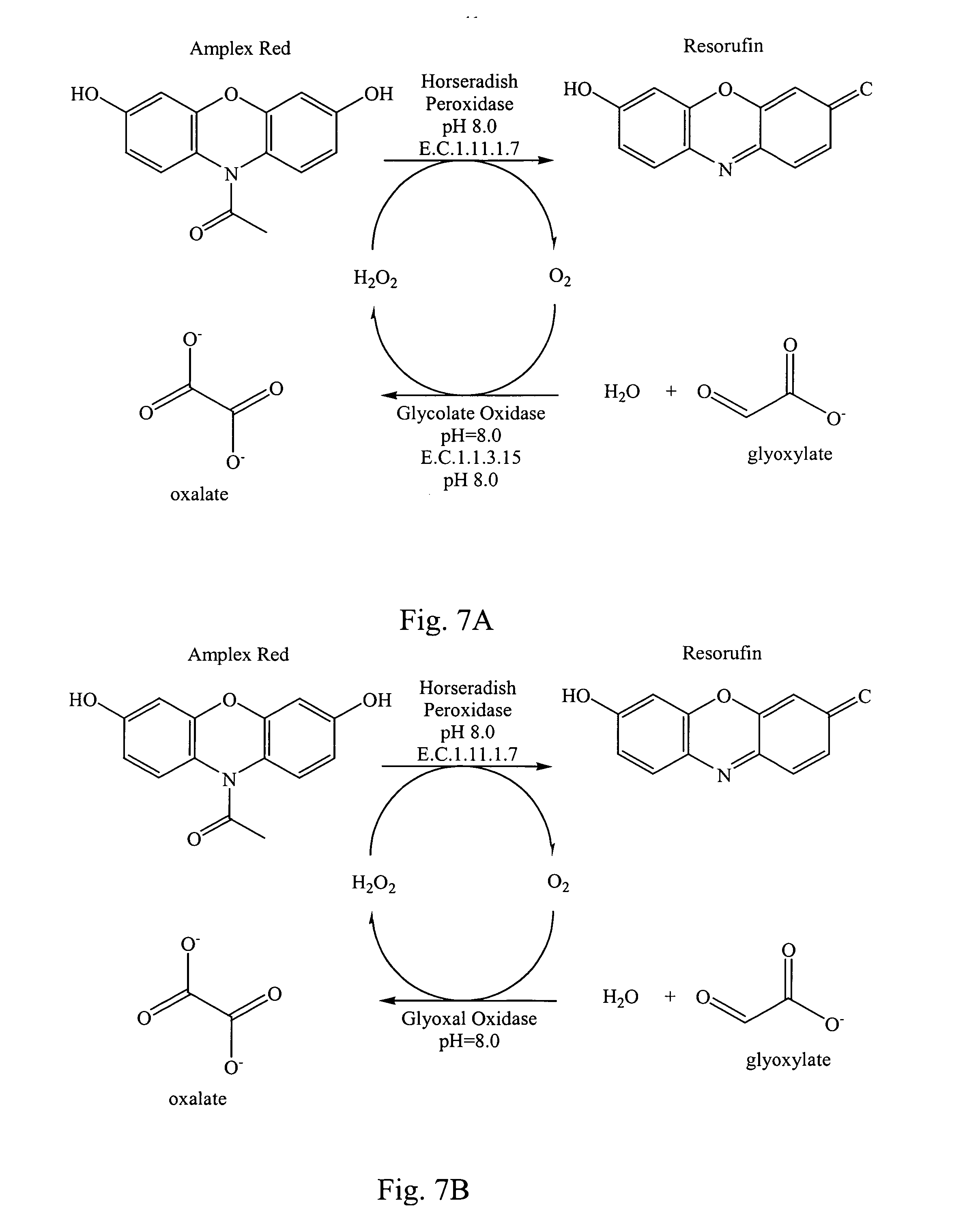 peptidylglycine alpha amidating enzyme Enzyme entry: ec 114173 pam peptidyl alpha-amidating enzyme peptidylglycine 2-hydroxylase peptidylglycine alpha-amidating monooxygenase.