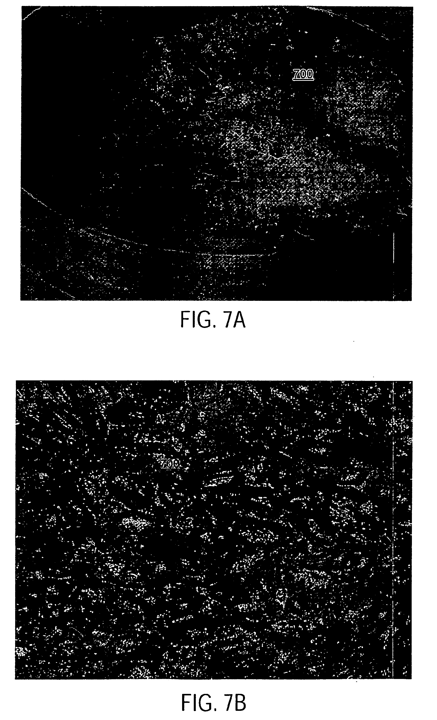 Patent Us20080274234 Processing Cocoa Beans And Other Seeds Excalibur Dehydrator Wiring Diagram Drawing