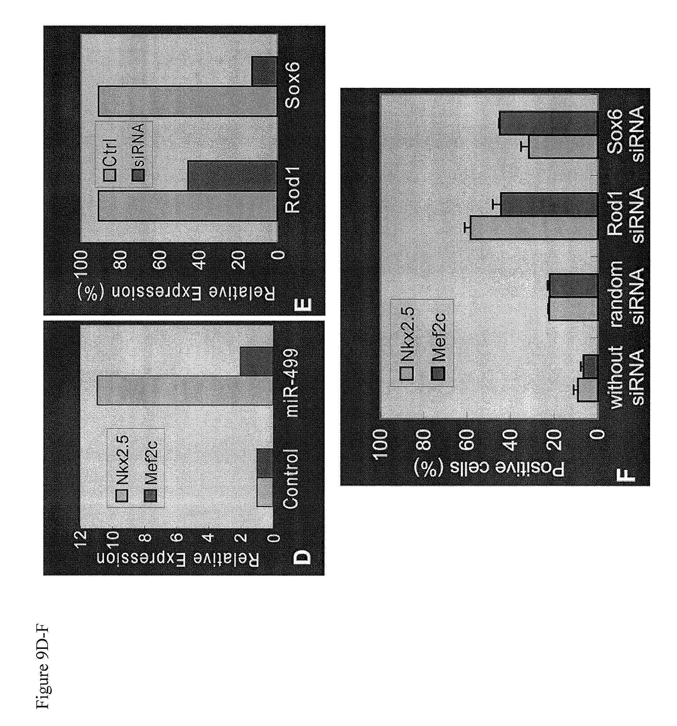 Patent US20090317369 - Compositions comprising cardiac stem cells ...