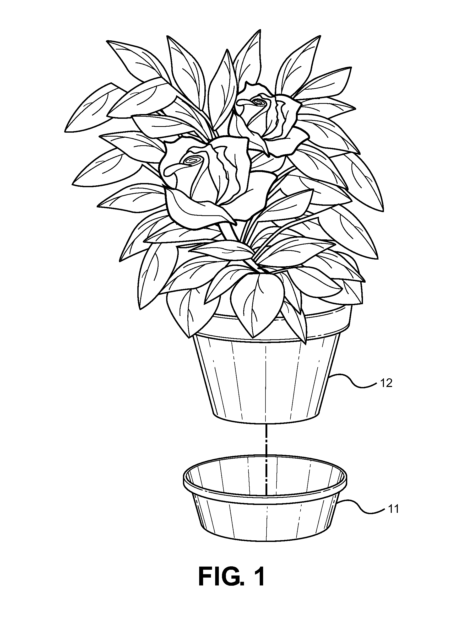 Potted plants and flowers drawing