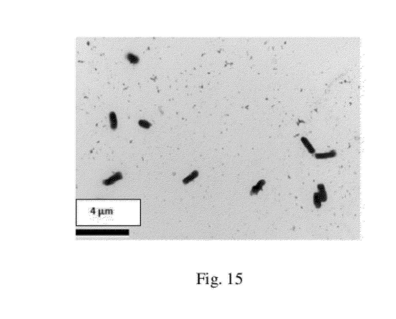 antibody drug gold nanoantennas with raman spectroscopic Antibody-drug gold nanoantennas with raman spectroscopic fingerprints for in vivo tumour  making these gold nanoantennas ideal for cancer.