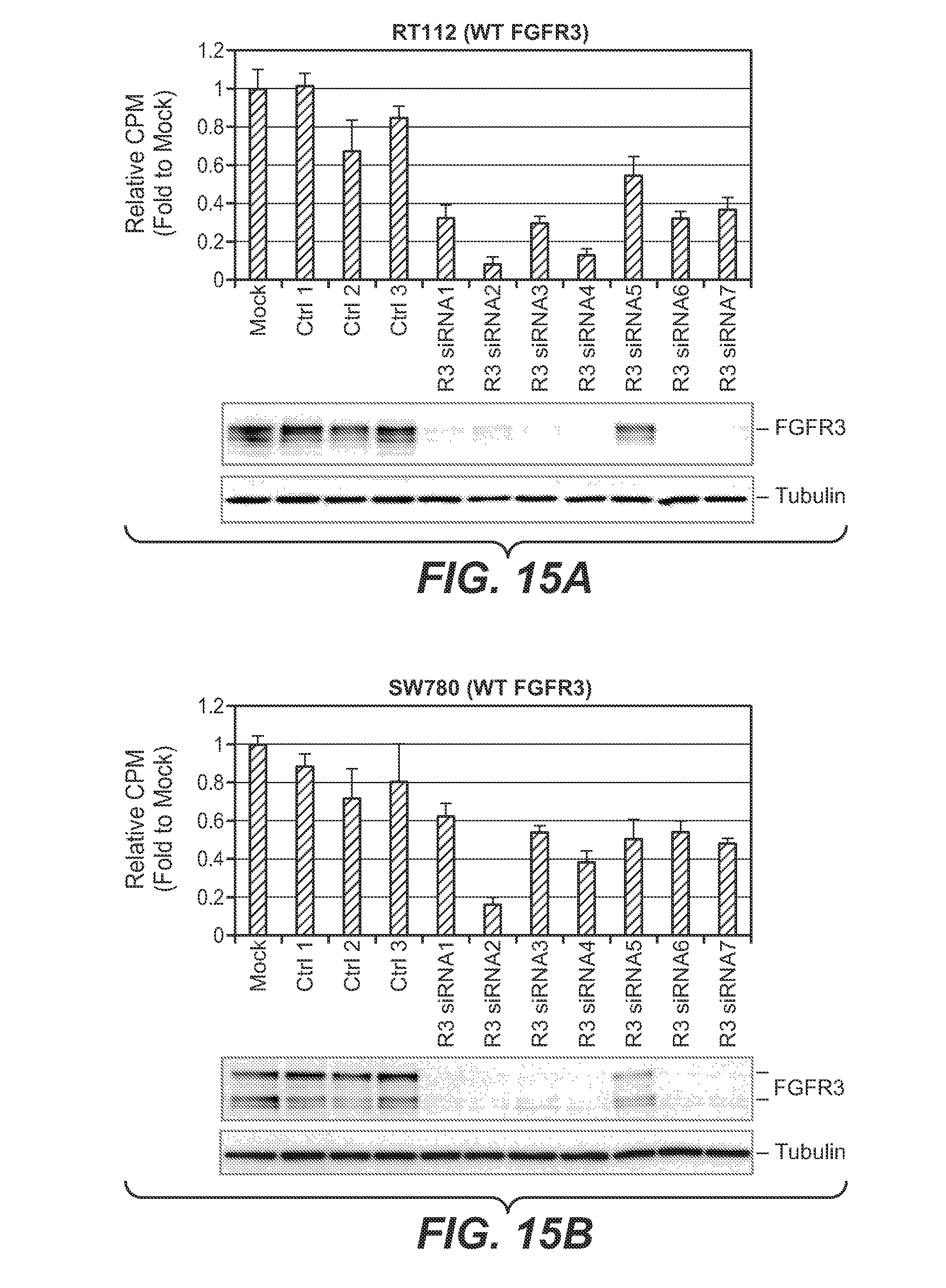 fgfr3 function The fgfr3 gene encodes fibroblast growth factor 3, one of a family of proteins involved in multiple processes such as regulation of cell growth and division.