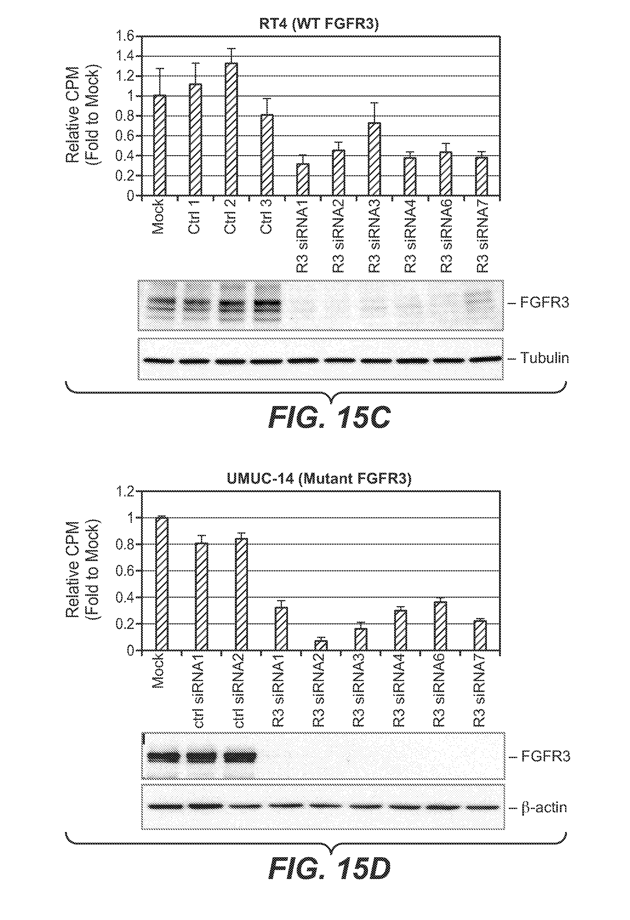 fgfr3 function Fgfr3 is also, it has been the function of fgfr3 membrane receptors the most comprehensive source about membrane receptors search main menu.