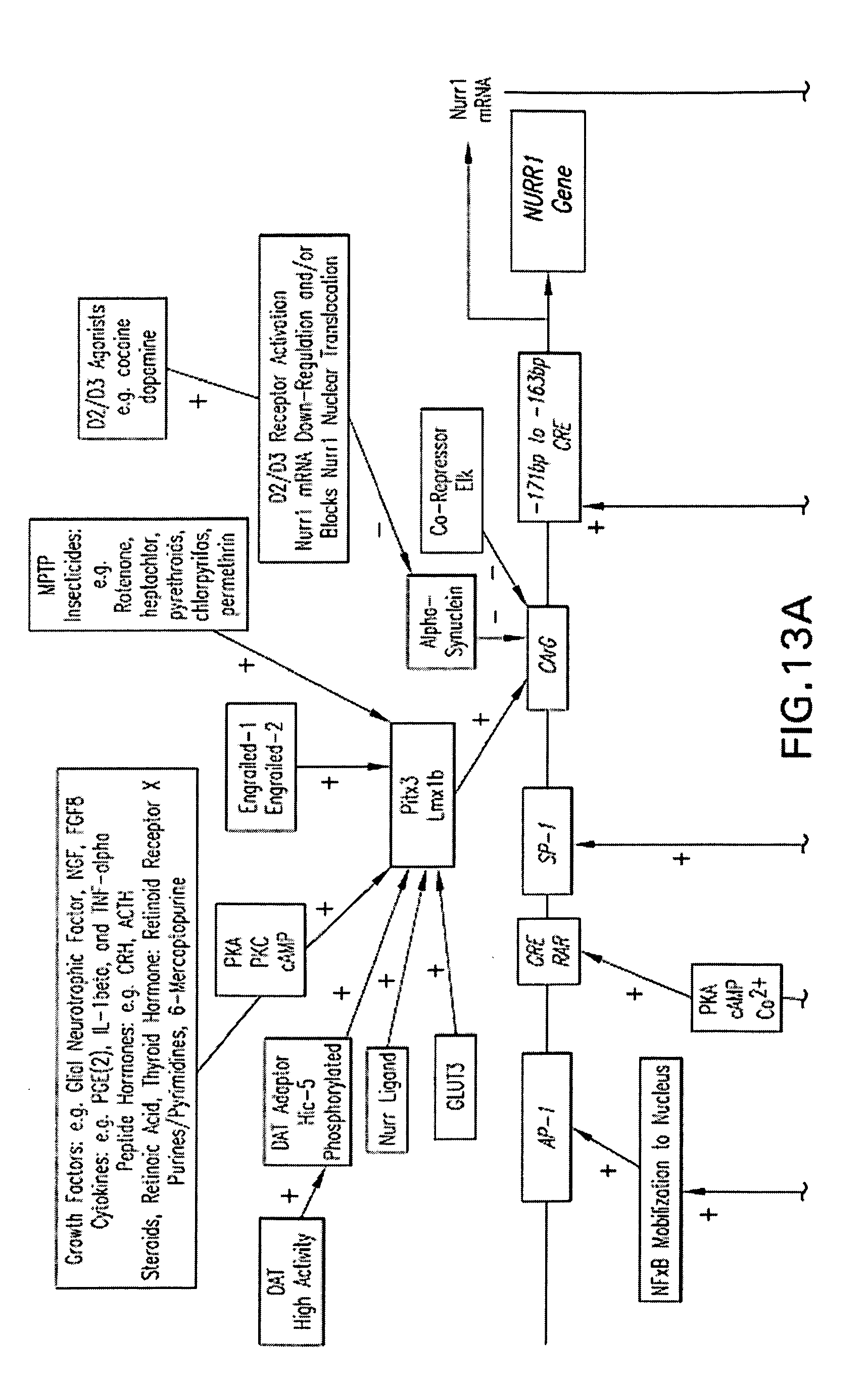 Patent Drawing D 2 Deoxyglucose Fischer Projection