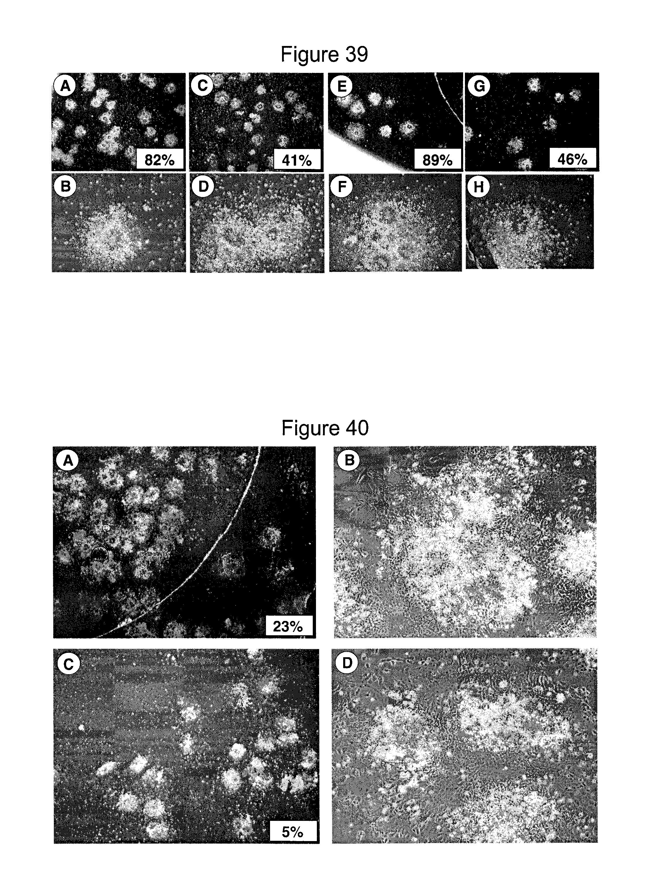 Patent US20130224857 - Method of differentiating stem cells ...