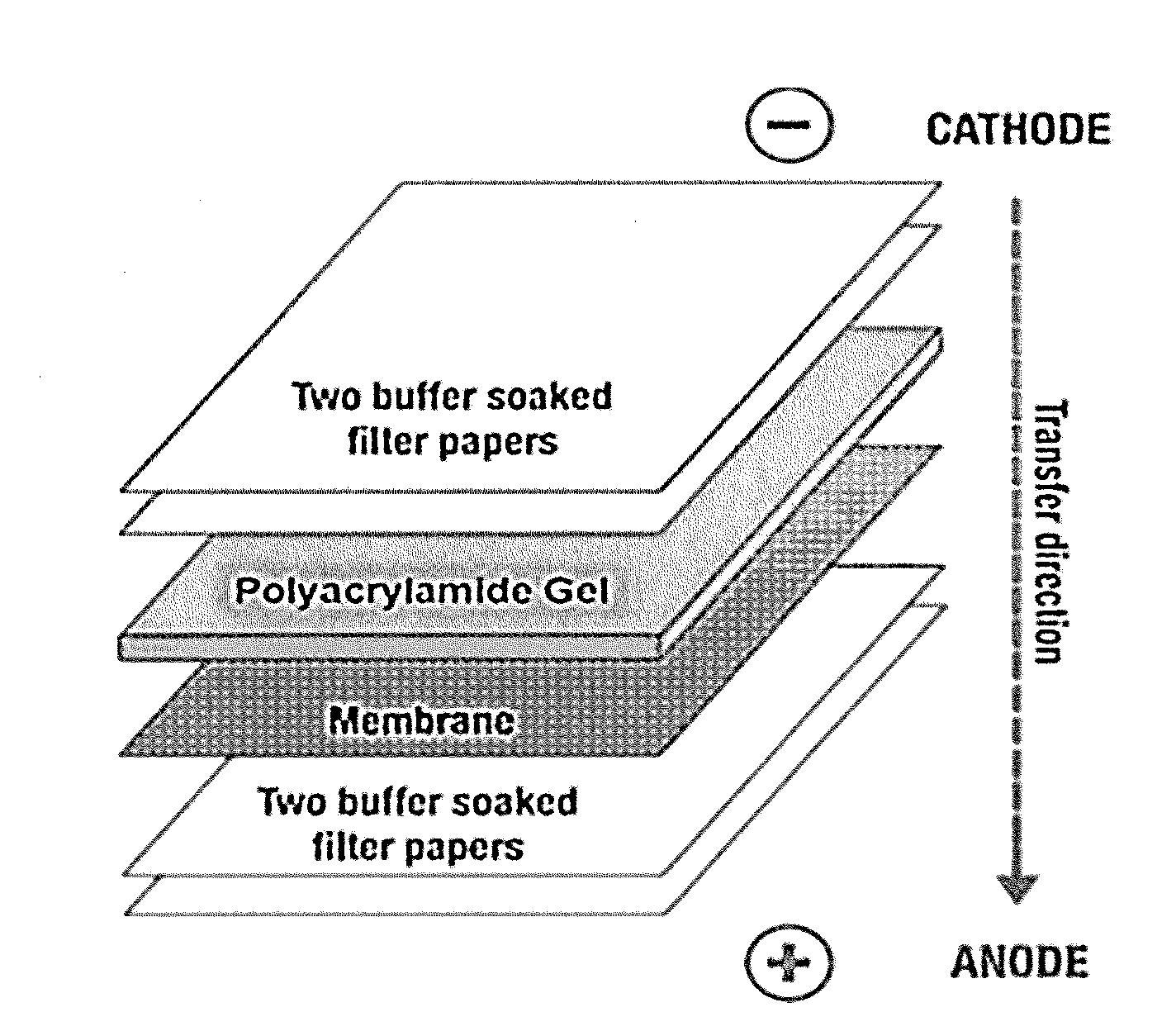 Patent Us20140224655 Electroblot Transfer Buffer
