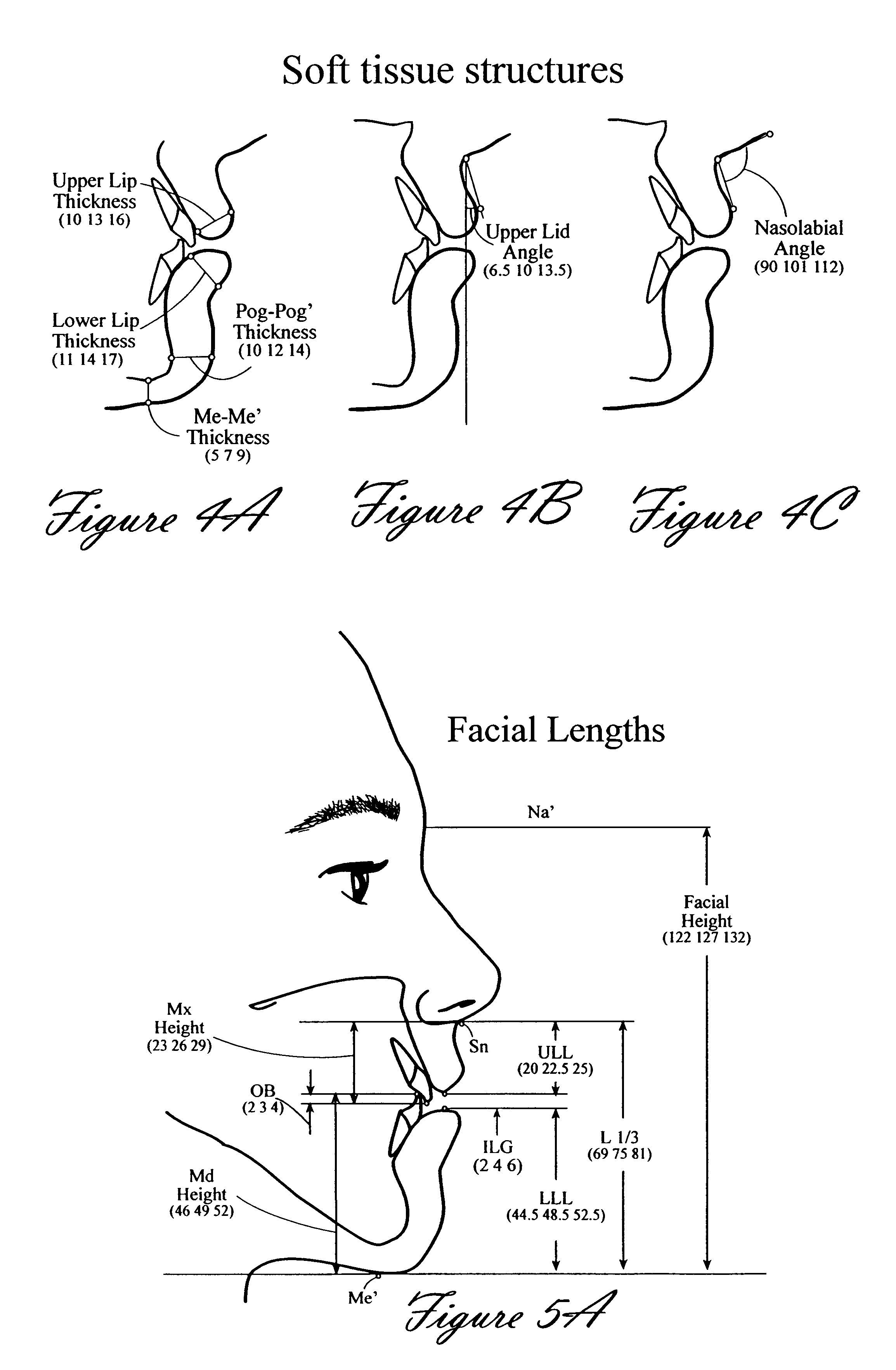 brevet us gender specific soft tissue cephalometric patent drawing