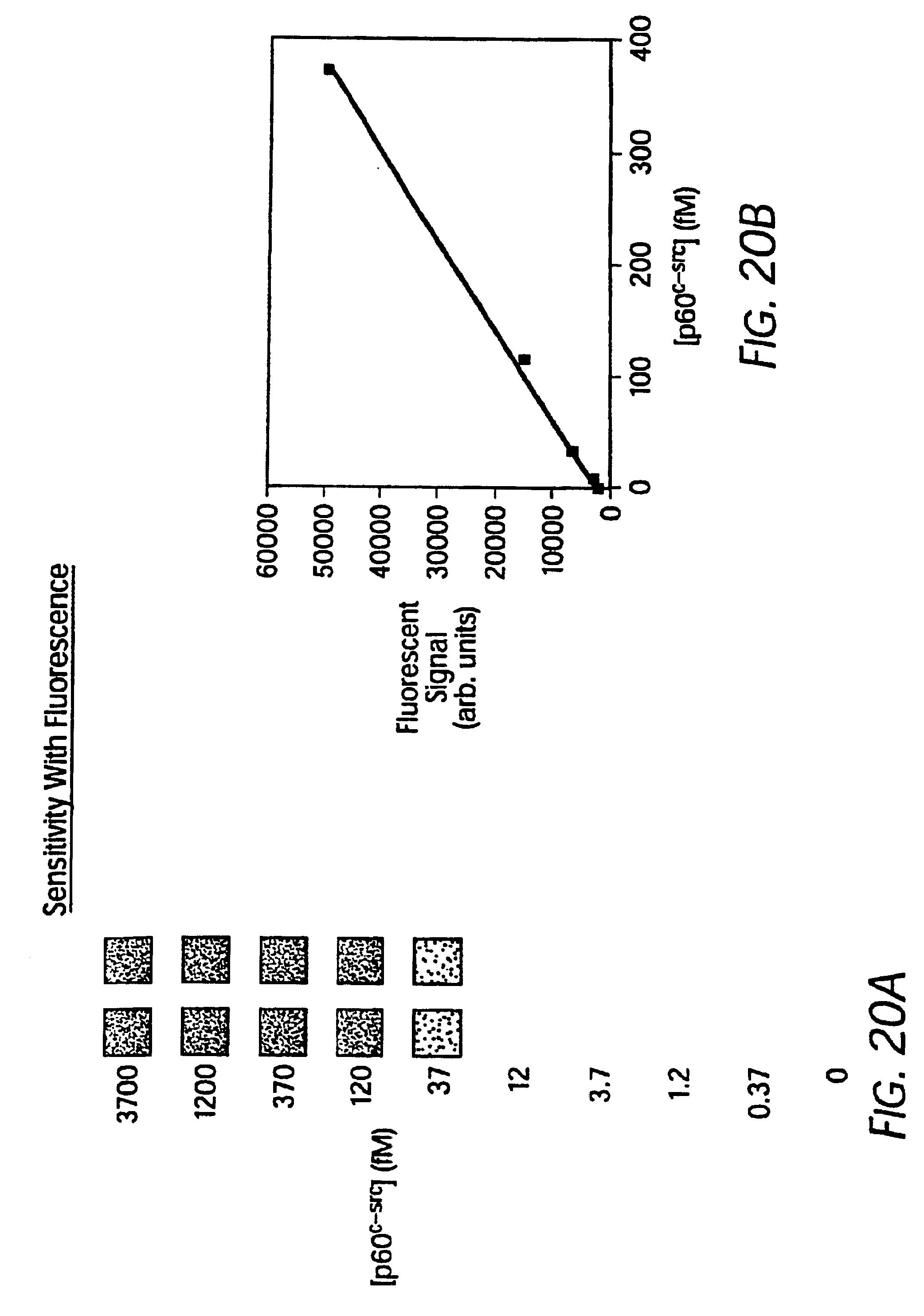 patent us6803205