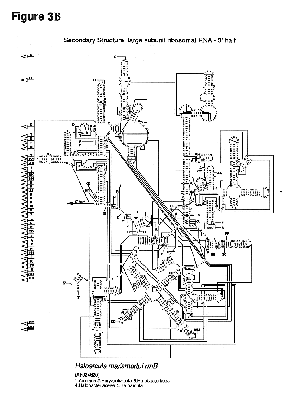 locomotive diesel engine diagrams html