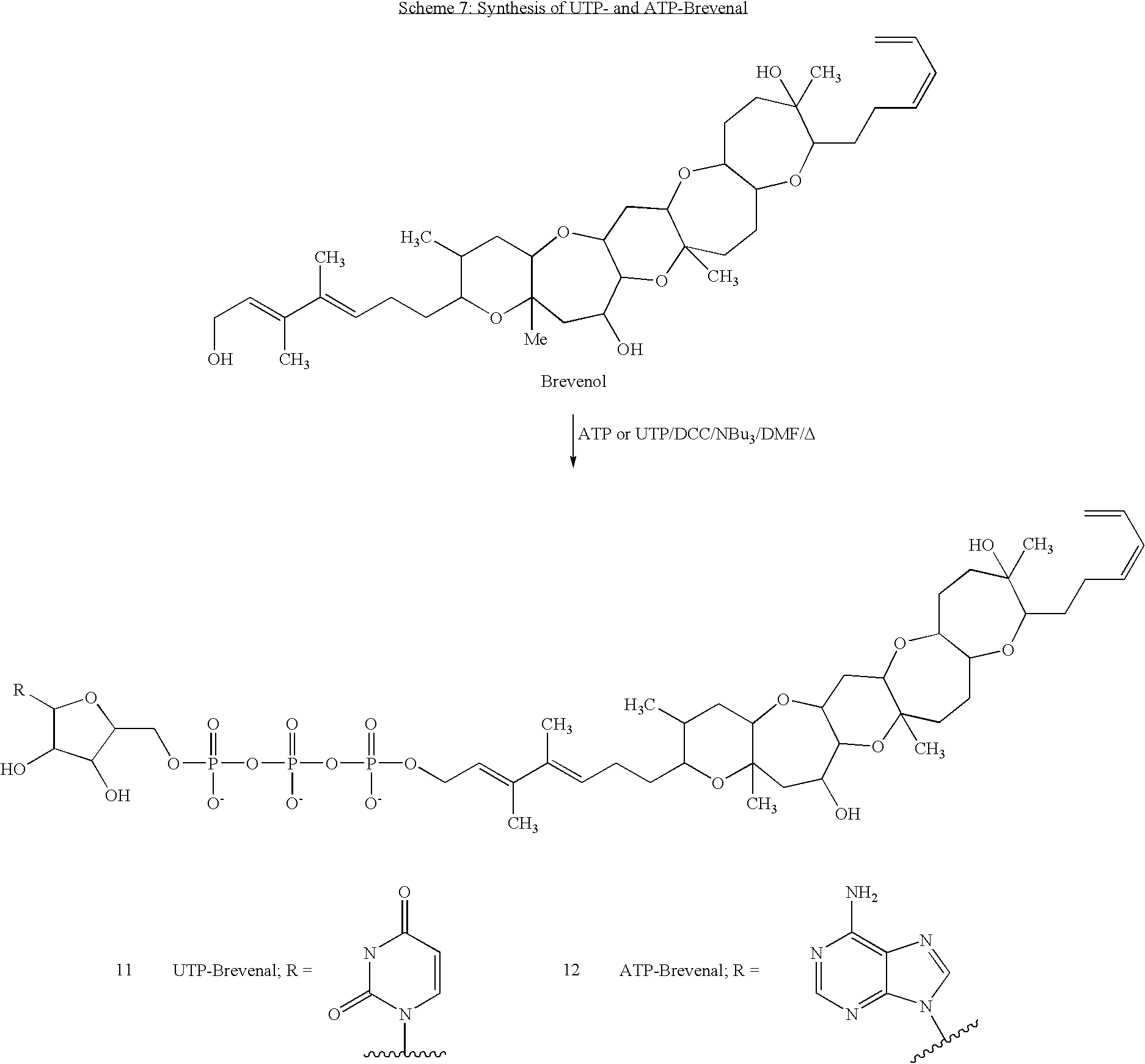 lidocaine dmf