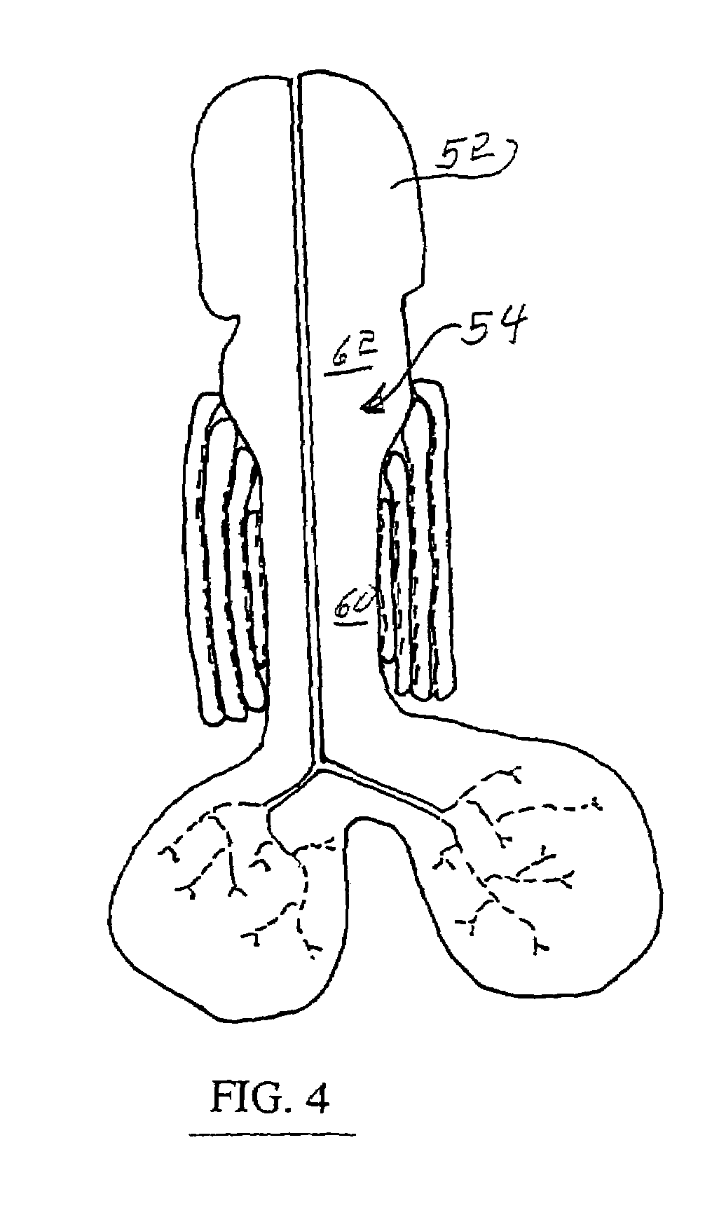 Circulatory system coloring pages