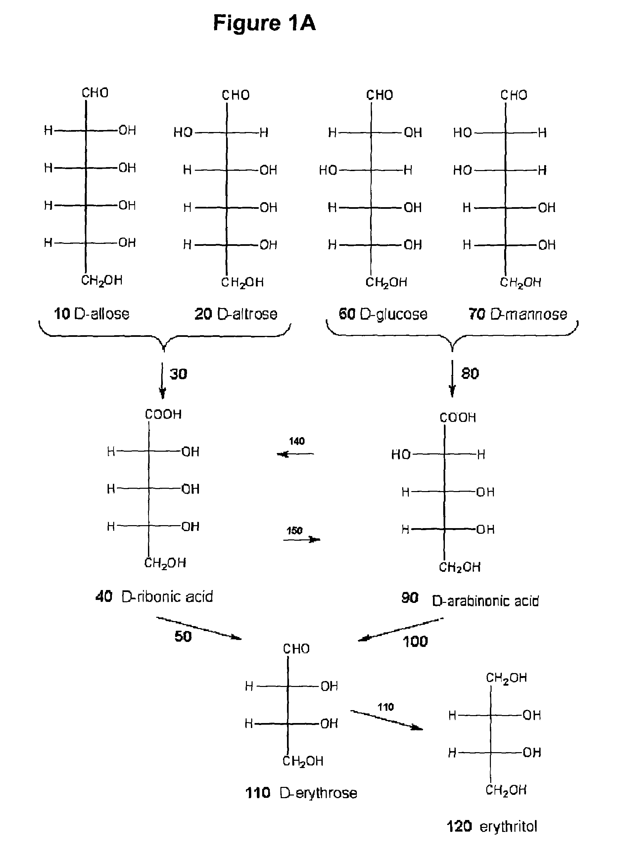 D 2 Deoxyglucose Fischer Projection Sorbitol Fischer Proje...