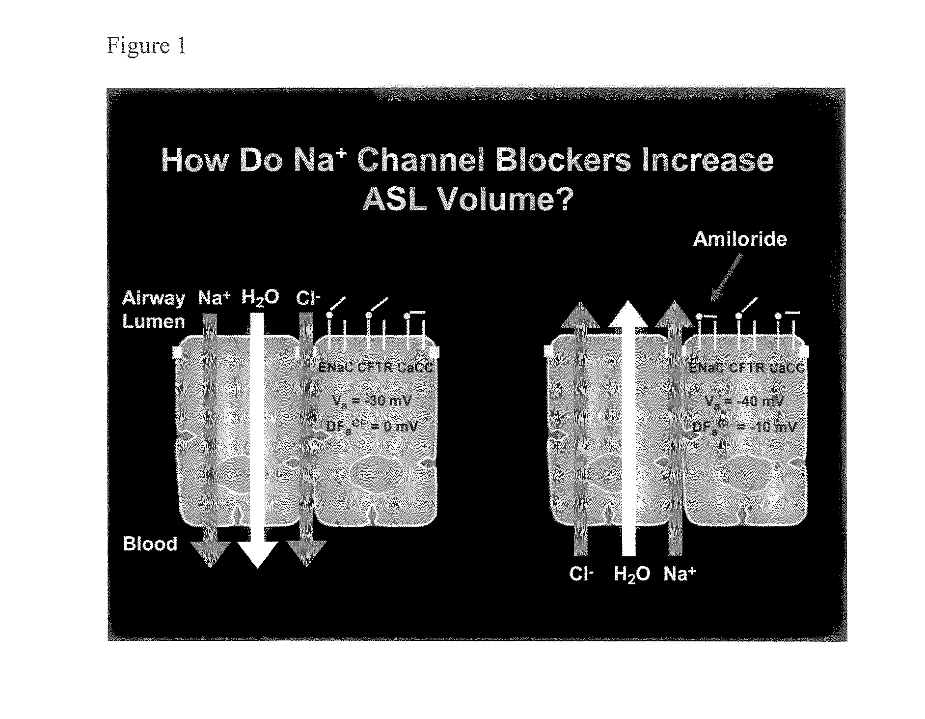 gabapentin sodium channel blocker