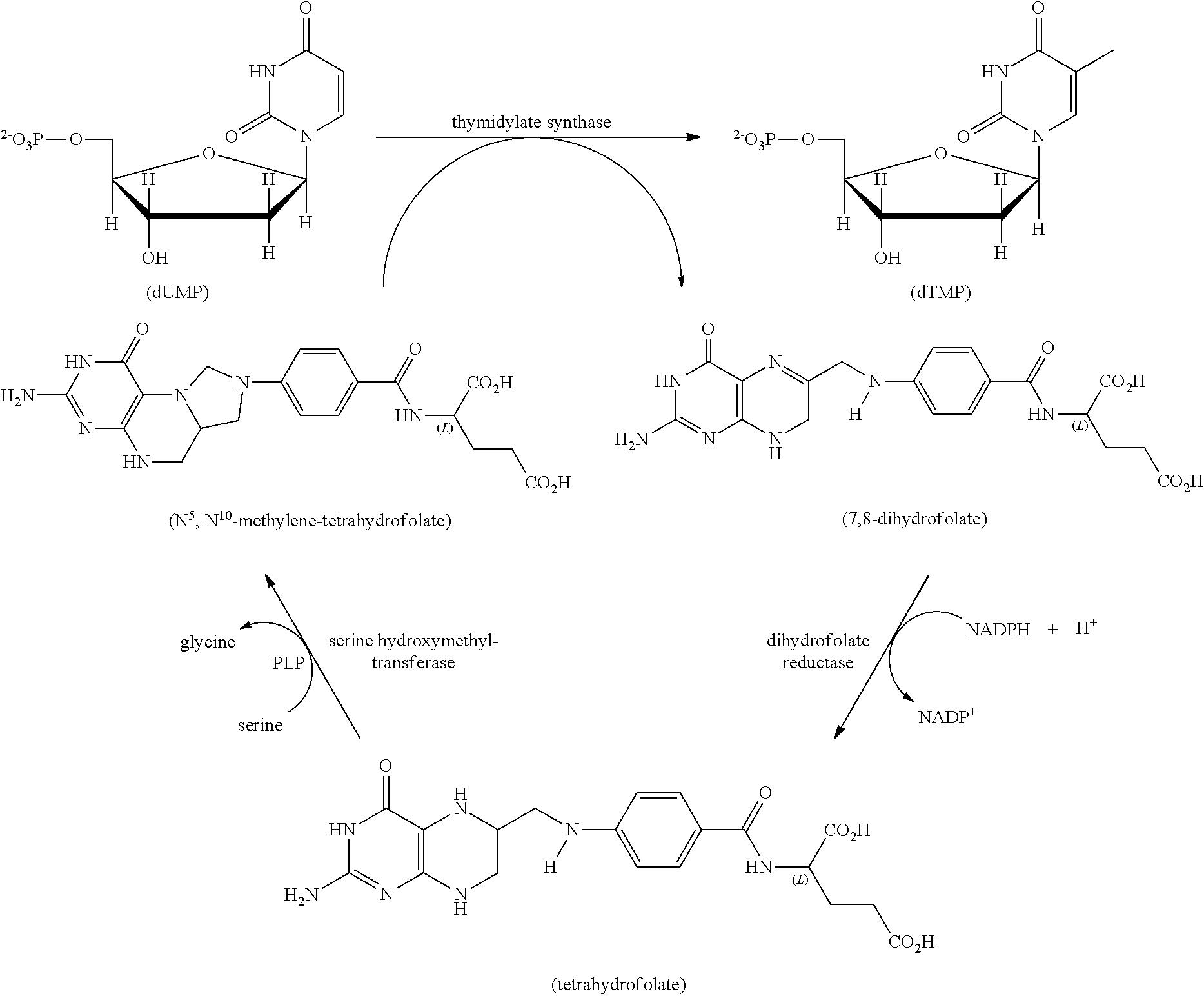 levaquin uses
