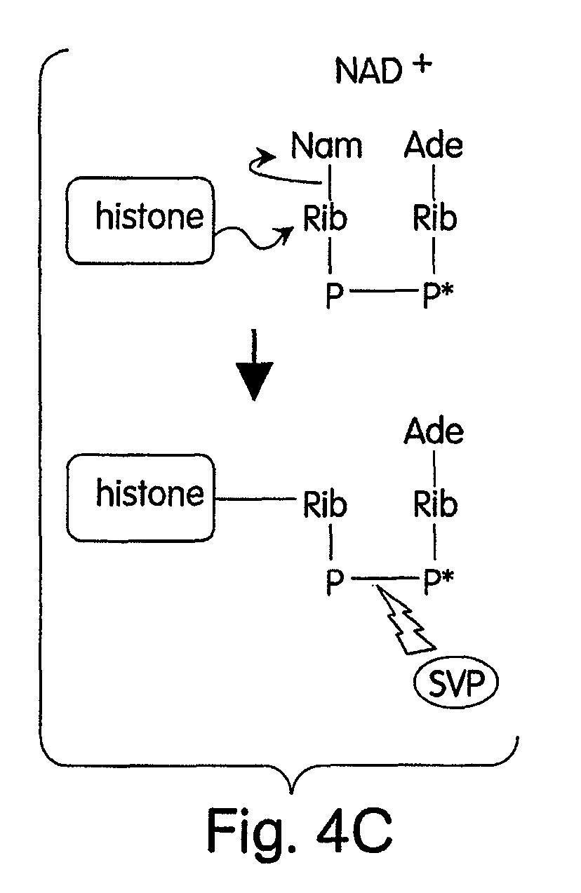 电路 电路图 电子 原理图 828_1273 竖版 竖屏