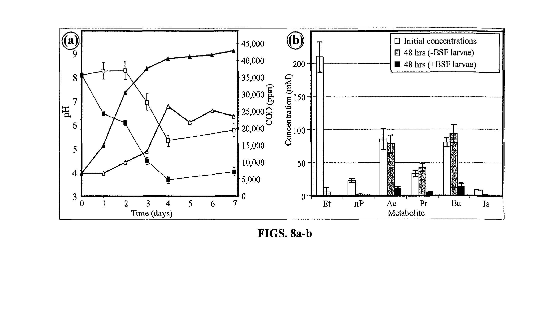 napa flasher wiring diagram flasher circuit diagram wiring