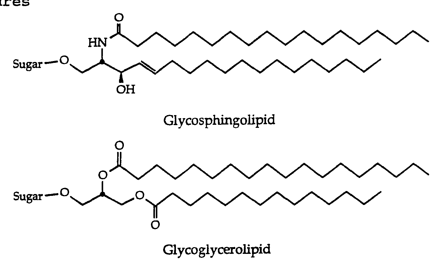 Sphingolipid Structure General structuresSphingolipid Structure