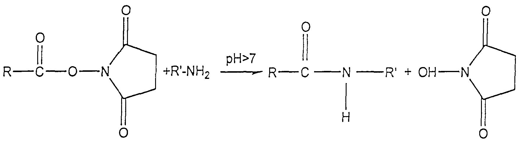 Maleimide Reaction Maleimide Reaction Scheme