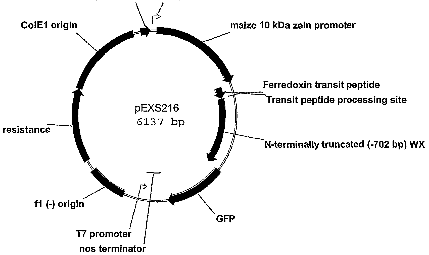 an analysis of the heart of fusion A single-chain antibody-cd39 fusion protein targeting  baker heart and diabetes  employing advanced clinically relevant methods of ultrasound analysis,.