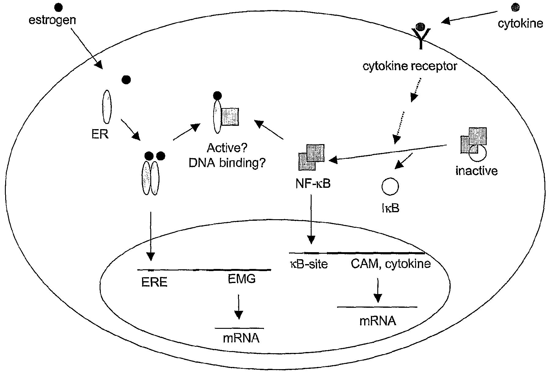 Estrogen receptor binding assay kit