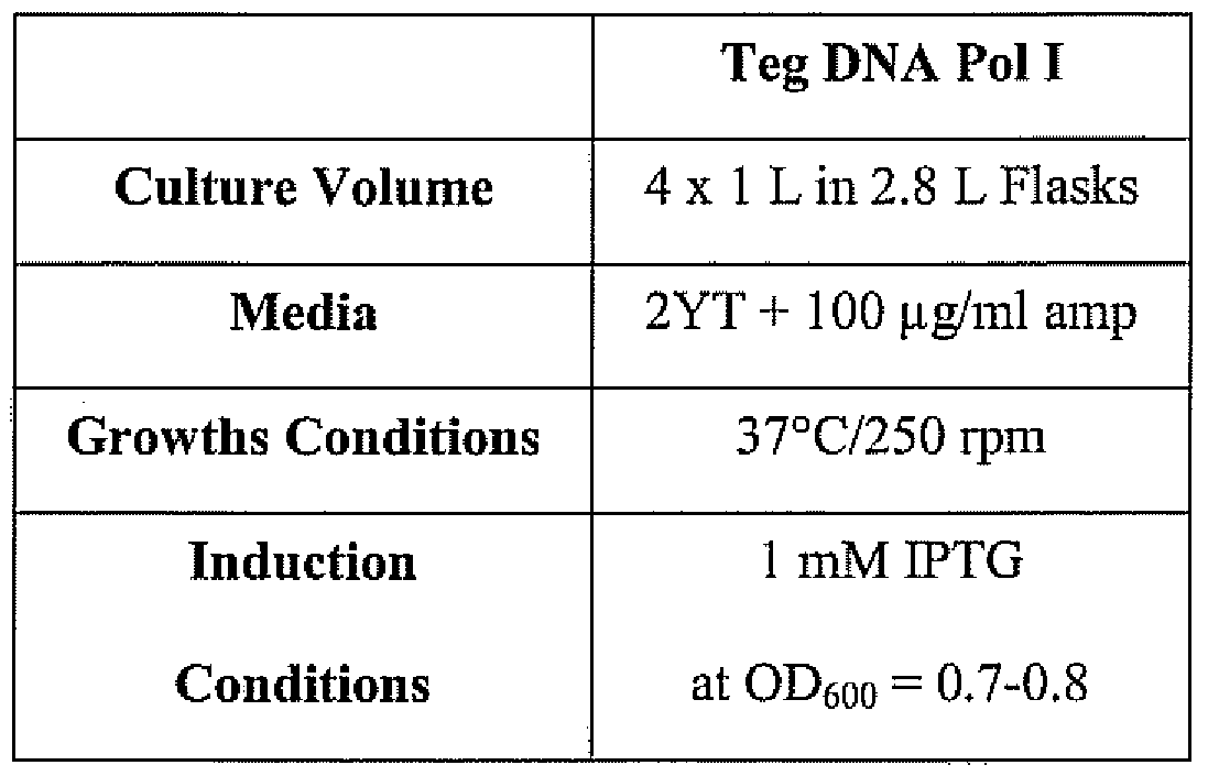 Patent EP2074212A1 - Thermus eggertssonii dna polymerases - Google ...